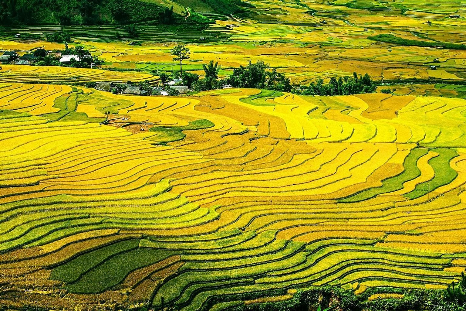 Bali's famous rice terraces look like colourful mosaics because some farmers plant synchronously, while others do so at different times. The resulting fractal patterns are rare for man-made systems and lead to optimal harvests without global planning