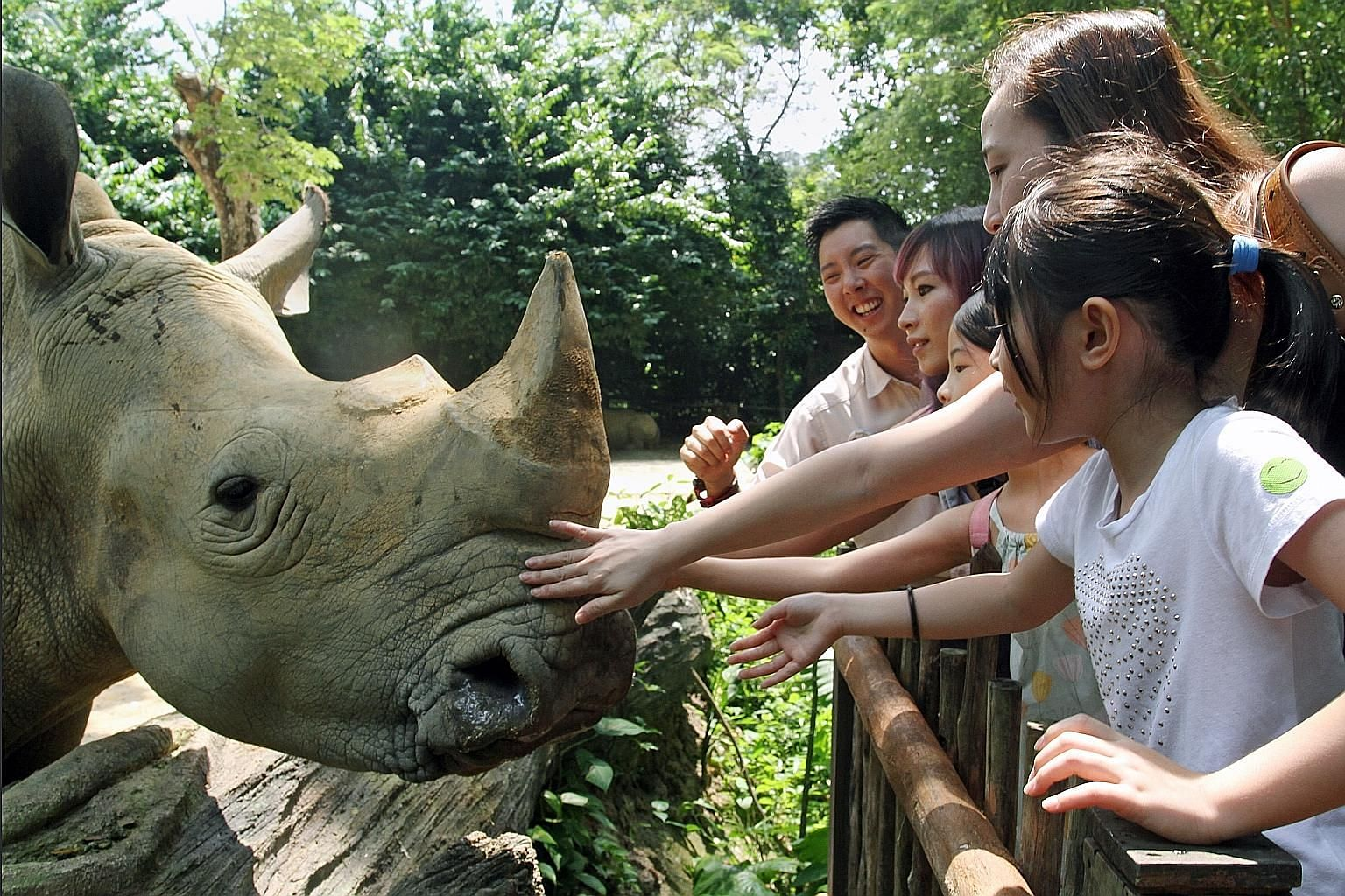 Get up close to the white rhinos at the Singapore Zoo on its African Hooves And Horns tour.
