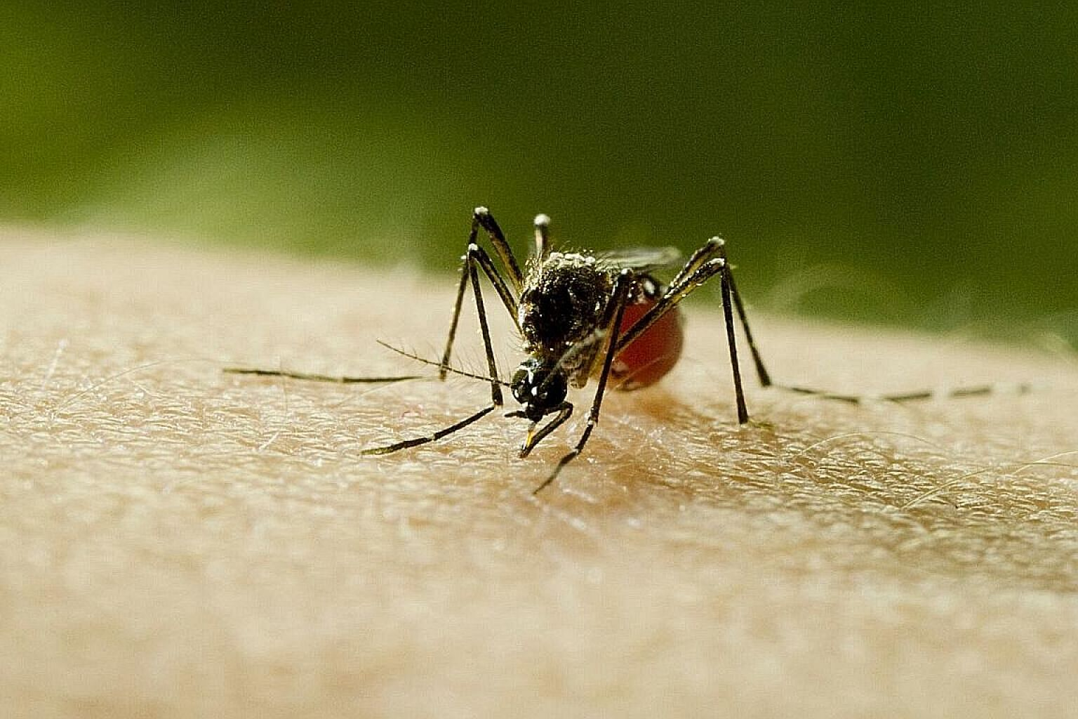 A still from Mosquito shows an Aedes aegypti mosquito, which can carry multiple diseases.