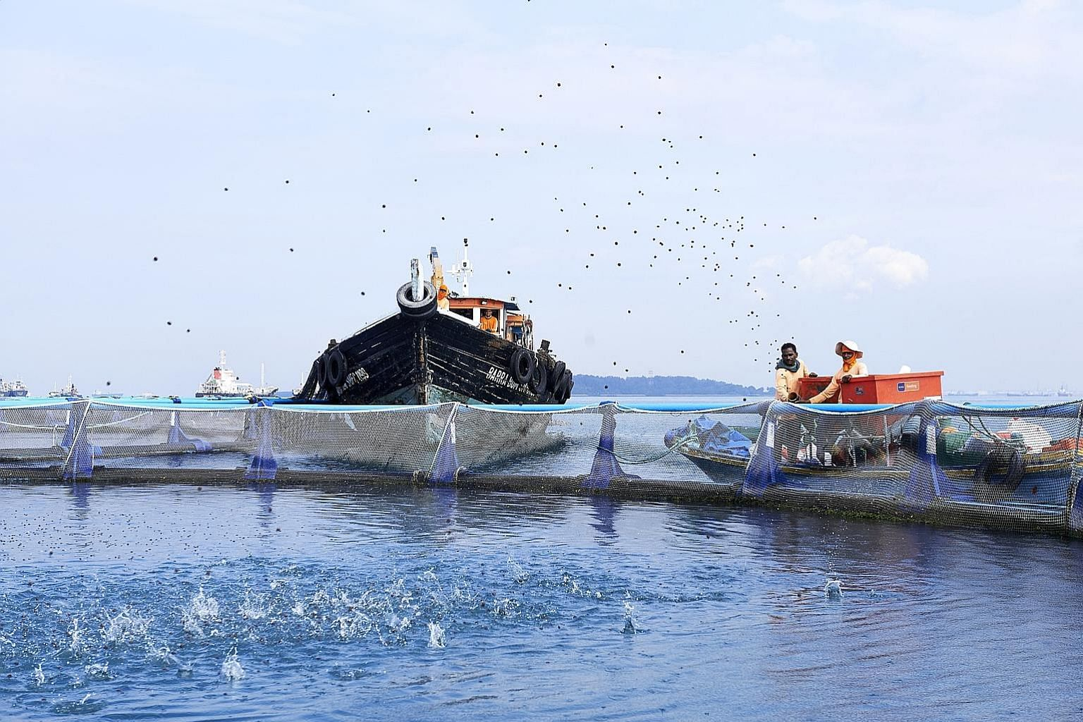 Workers at Barramundi Asia, a fish farm off Singapore's southern coast, manually operating a feeding machine. The farm is considering investing in an automatic remote feeding system that will allow workers to monitor how much feed is given, and wheth
