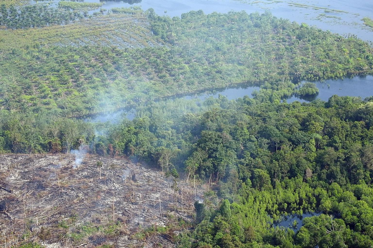 Smoke rising from clearings in Indonesia's Giam Siak Kecil-Bukit Batu Biosphere Reserve in February this year. The protected forest was being cleared illegally to make way for plantations.