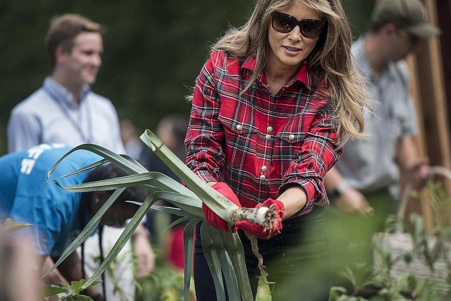 Mrs Melania Trump harvested and planted fresh produce alongside a dozen children last Friday at the White House Kitchen Garden, established in 2009 by Mrs Michelle Obama as part of her work fighting childhood obesity.