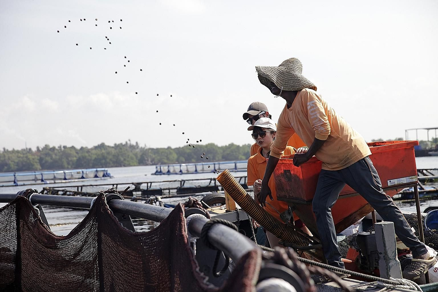 Straits Times journalist Audrey Tan, farm manager Emmanuel de Braux (behind her) and a farm worker who uses a device to spray fish feed into the pens at Barramundi Asia's fish farm.
