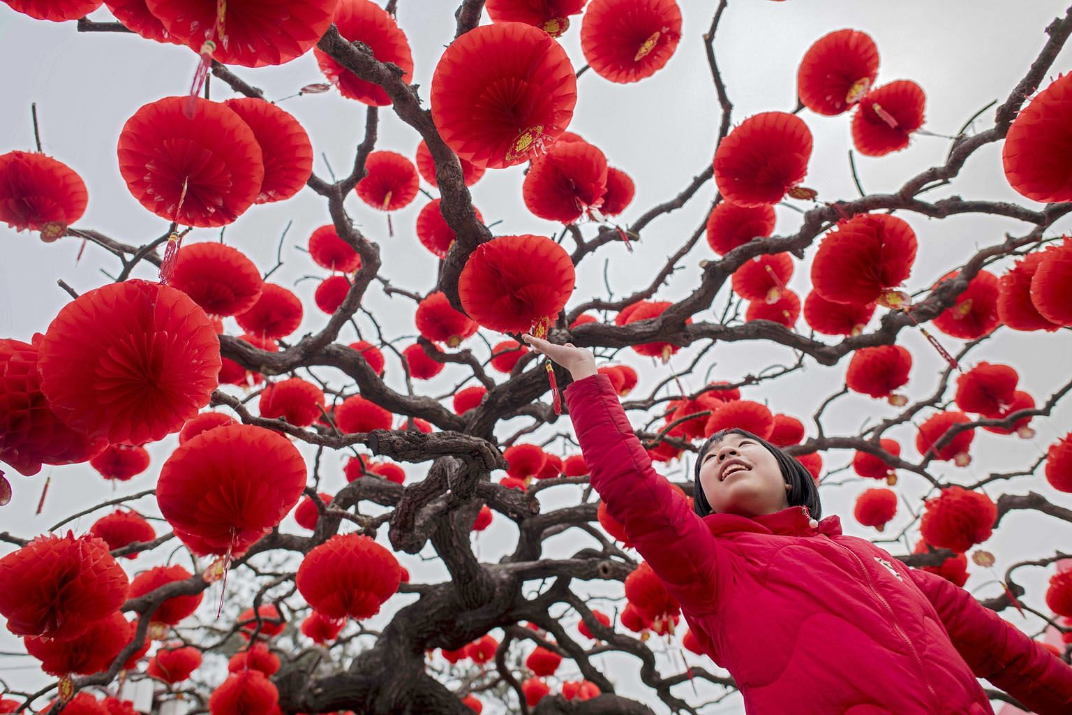 CHINA: A girl in Beijing admiring the numerous lanterns creating an explosion of colour in an otherwise grey winter landscape. Chinese New Year celebrations across China are scheduled to last a week, with millions of migrant workers returning to their hom