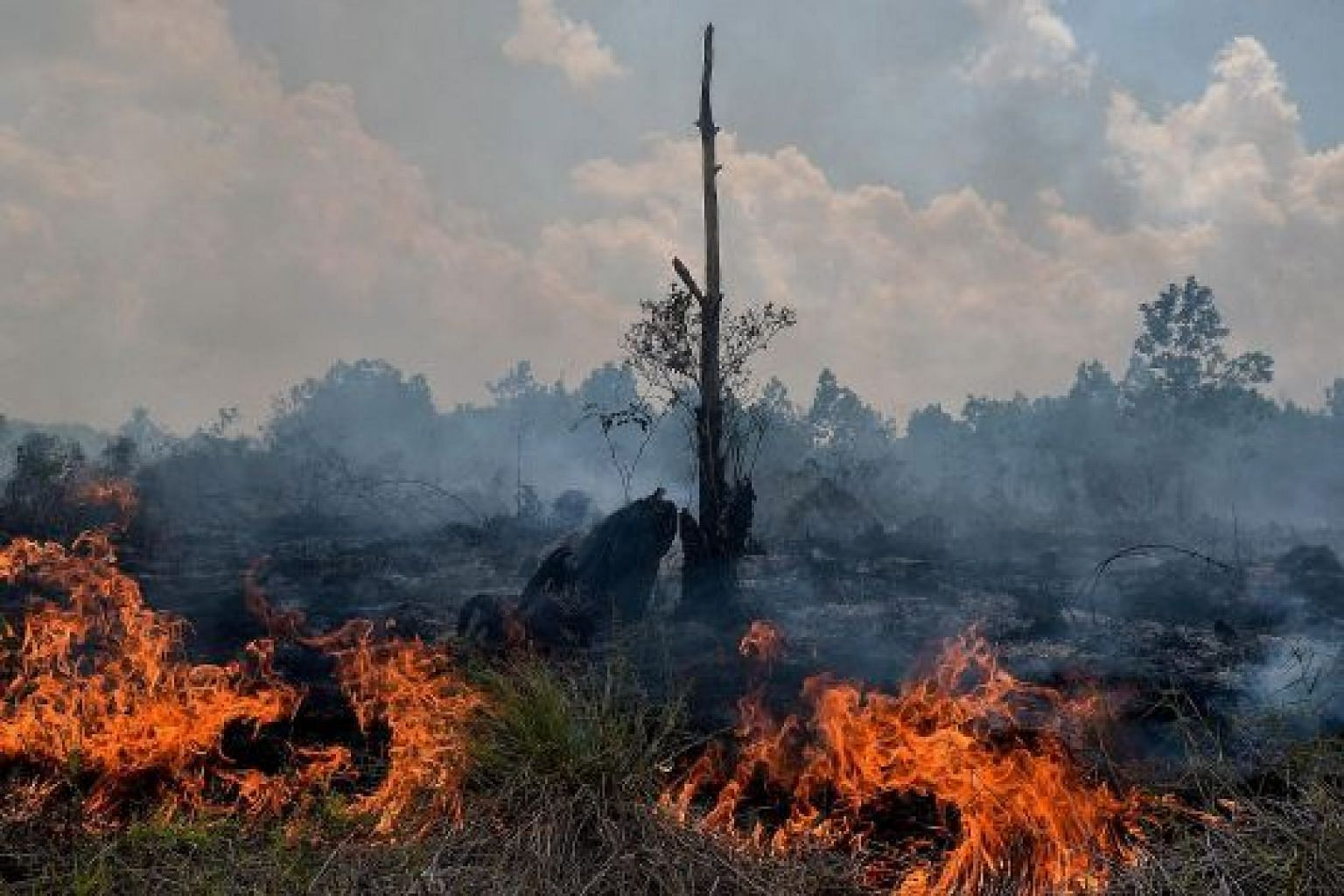 A peatland fire in Pekanbaru on Feb 1. The peatlands of Riau province account for more than 50 per cent of the total on the island.