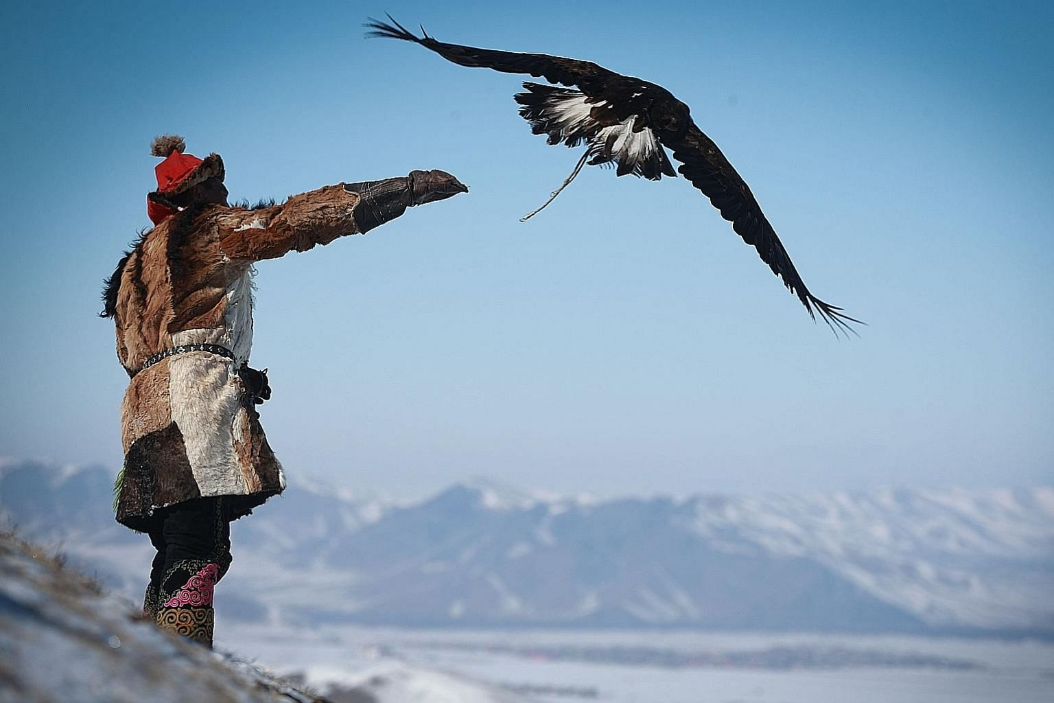 A man releasing an eagle during the Spring Eagle Festival in Ulaanbaatar, the capital of Mongolia. Members of Mongolia's Kazakh ethnic group celebrate their 6,000-year-old history of eagle-hunting with an annual festival which aims to draw tourists a