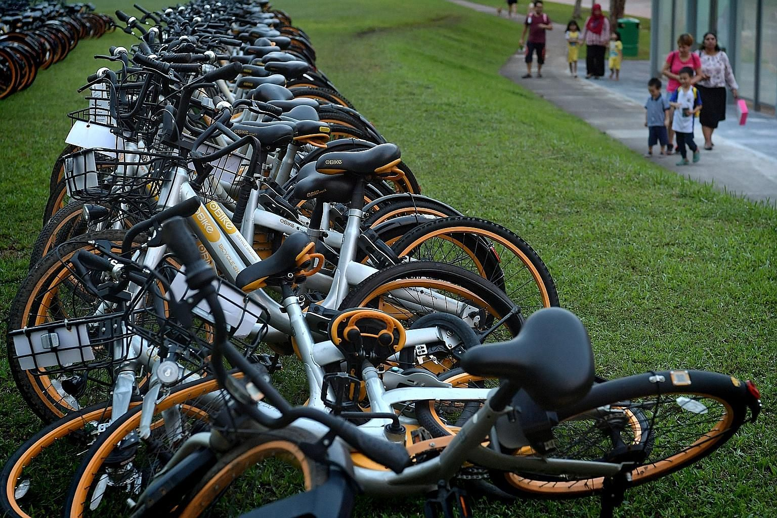 Rows of oBikes in a field in Sengkang yesterday evening. Mr Shi Yi said the firm would not be able to clear all its bikes by yesterday's deadline and was likely to need an extension.