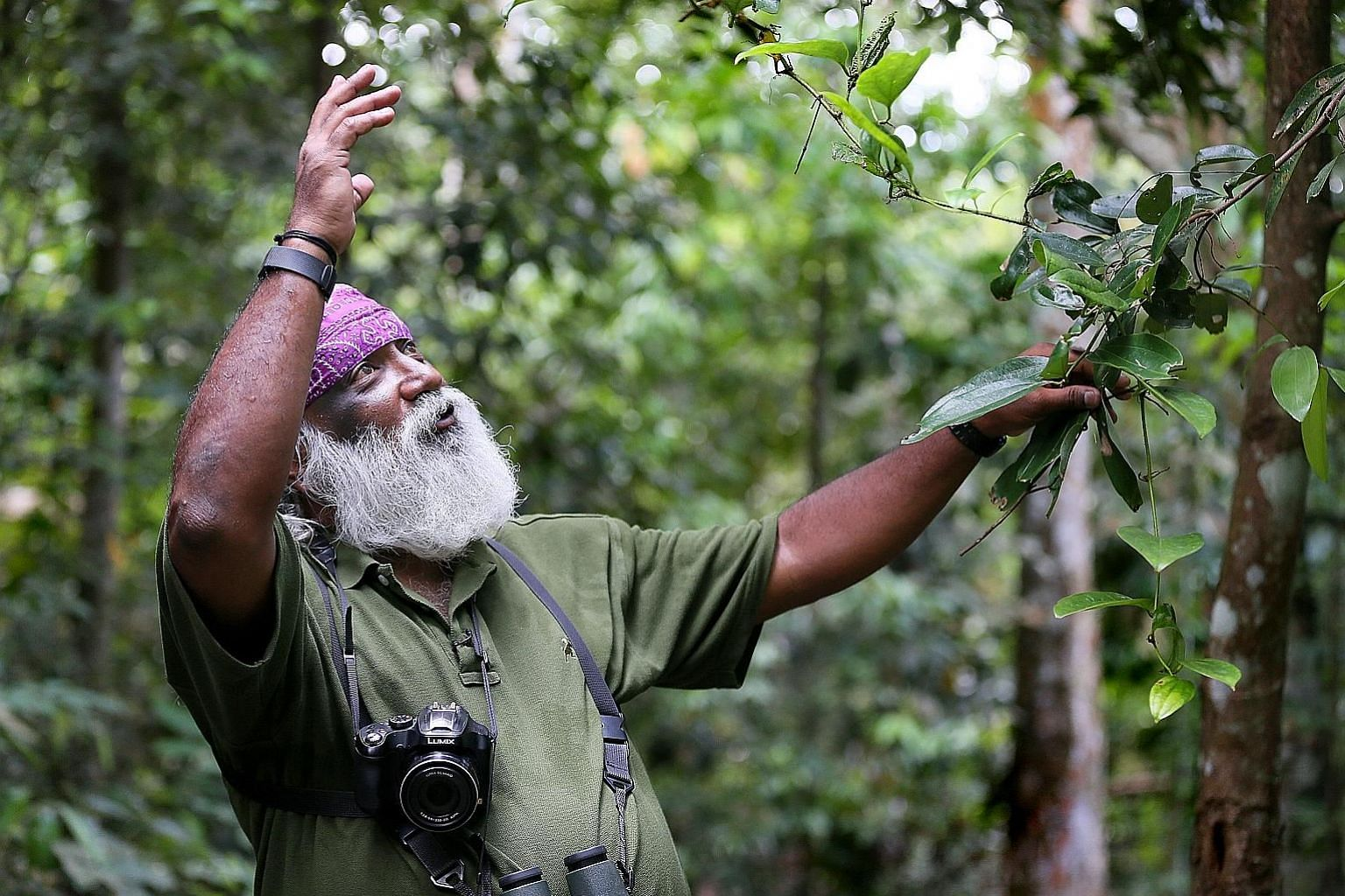 The nature community, including veteran wildlife expert Subaraj Rajathurai, believes the roadkills happened because Mandai Park Development did not take enough care to reduce environmental impact.