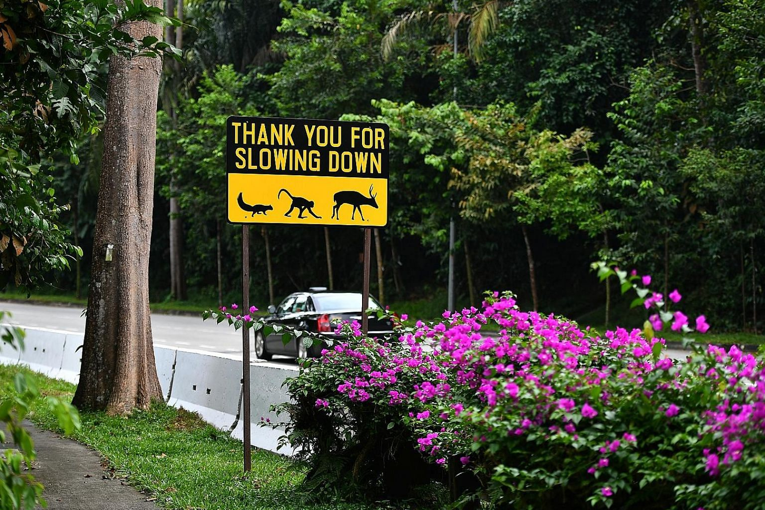 Before development works started at Mandai Lake Road in January last year, Mandai Park Development installed speed-regulating elements such as humps and strips, and hoardings to stop animals from running onto the road. But there are gaps between the hoard