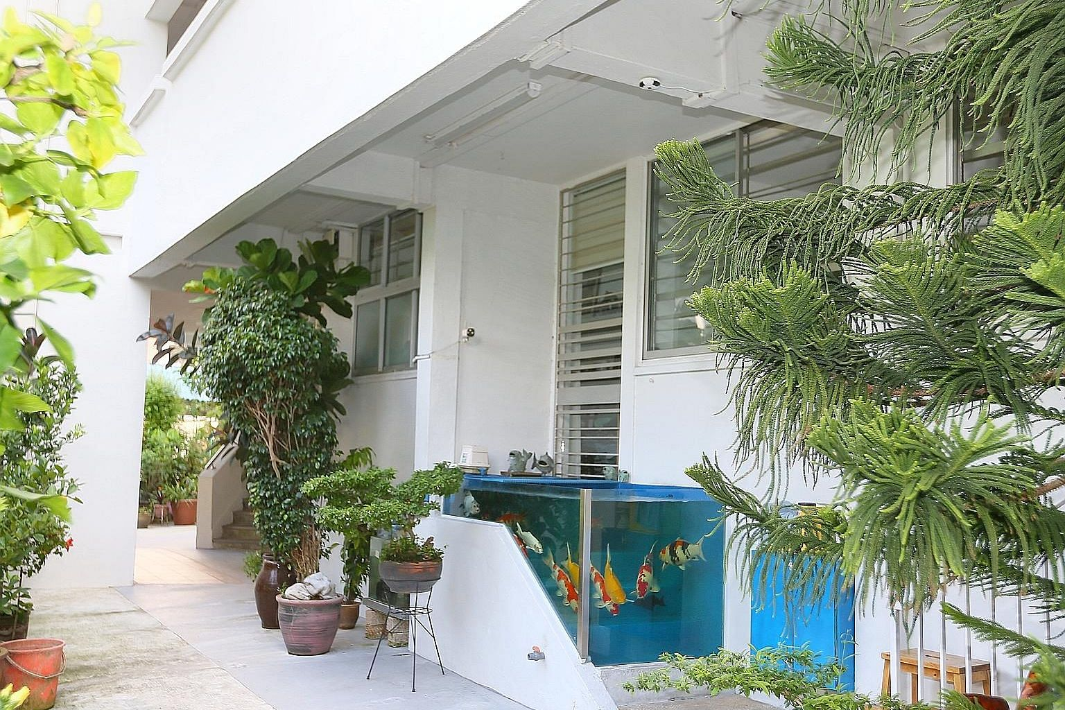 The fish tank, built on a multi-step entrance of a ground-floor flat in Tampines Street 41, contains nine koi fish and two sucker fish. Though the entrance is blocked, the residents can access their home through the adjacent unit, which is also owned
