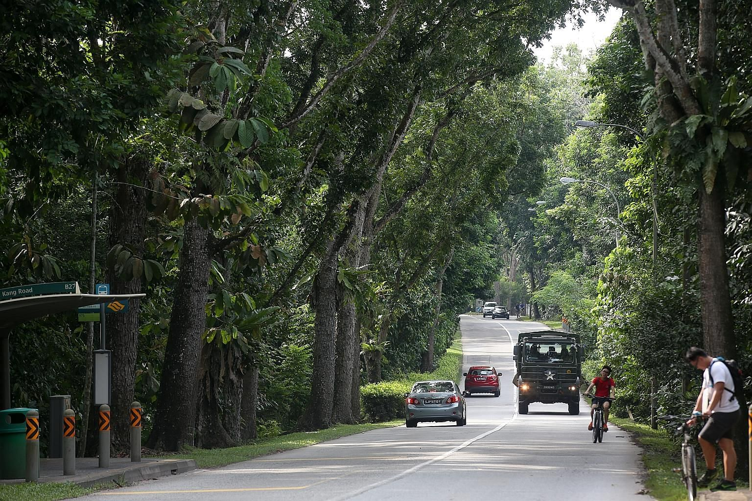 Besides giving shade and beautifying our roads, trees also help to slow stormwater run-off and help soil absorb more rainwater, reducing the strain on the drainage network.