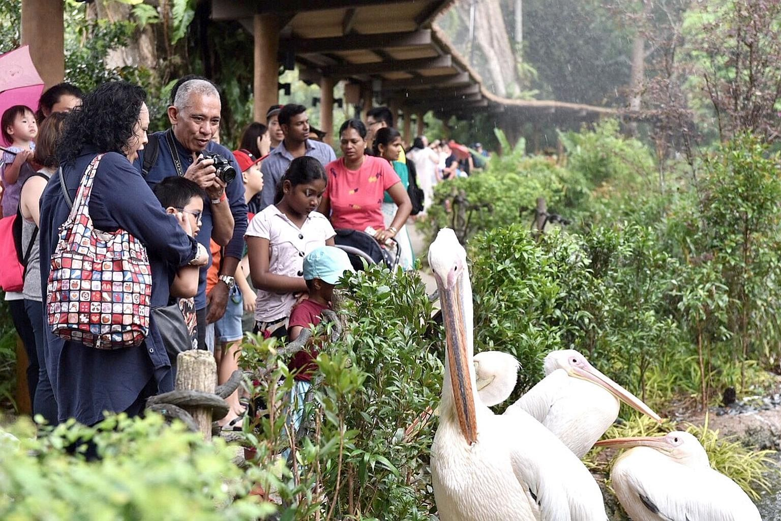Mr Hasman Tahir (with camera), 53, and his wife, Madam Saminah Abdullah, 47, with their son Aqashah Tahhirruddin Tahir, seven, at the Singapore Zoo on Sunday morning. The People's Association and Wildlife Reserves Singapore have teamed up to launch a