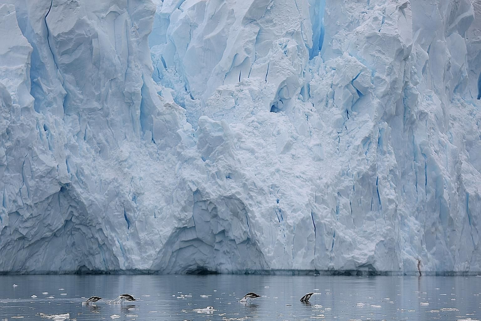 Penguins scrambling up a mountain on Danco Island in Antarctica, and swimming next to a glacier in Neko Harbour (right). A glacier in Half Moon Bay, Antarctica (left), and a section of a new map of the continent made with satellites owned by the Nati