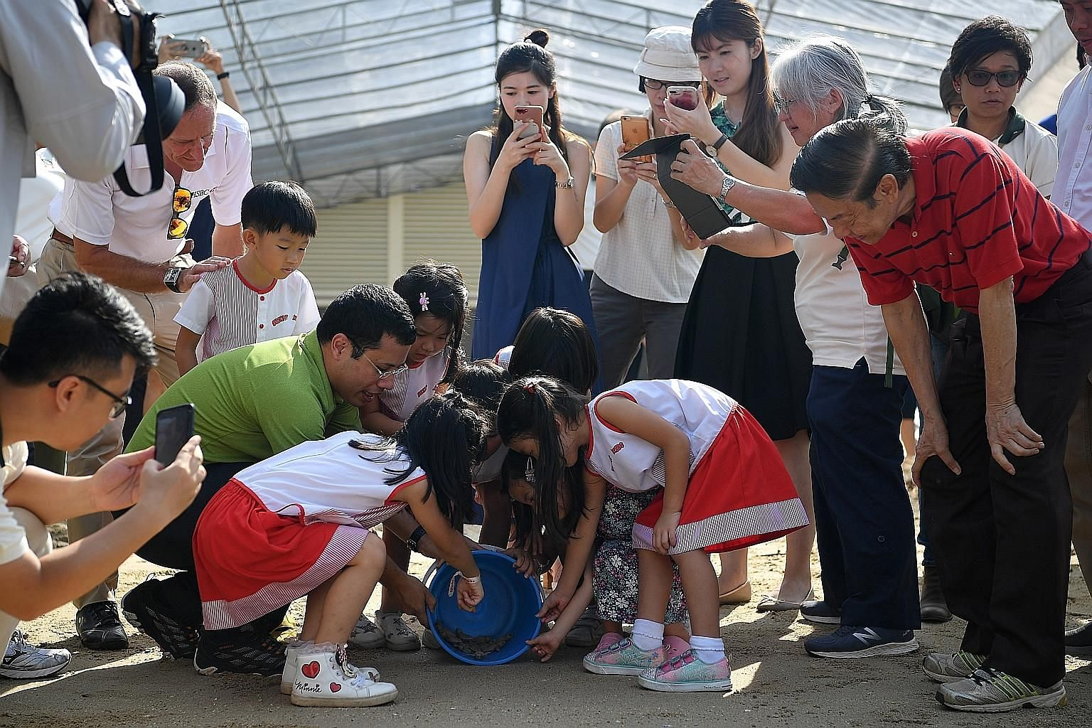 Hatchlings at the incubation sandpit area (above), and being released by Bright Kids School House children and Second Minister for National Development Desmond Lee (right), at the hatchery's launch yesterday.