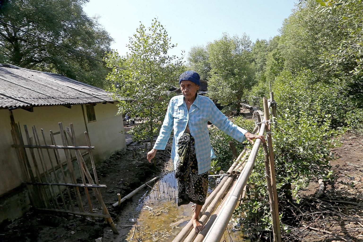 Residents from the now underwater eastern part of Pantai Bahagia village in Bekasi district, just outside Jakarta, moved to the northern and western parts and built elevated bamboo pathways. These pathways become most useful when the water rises to i