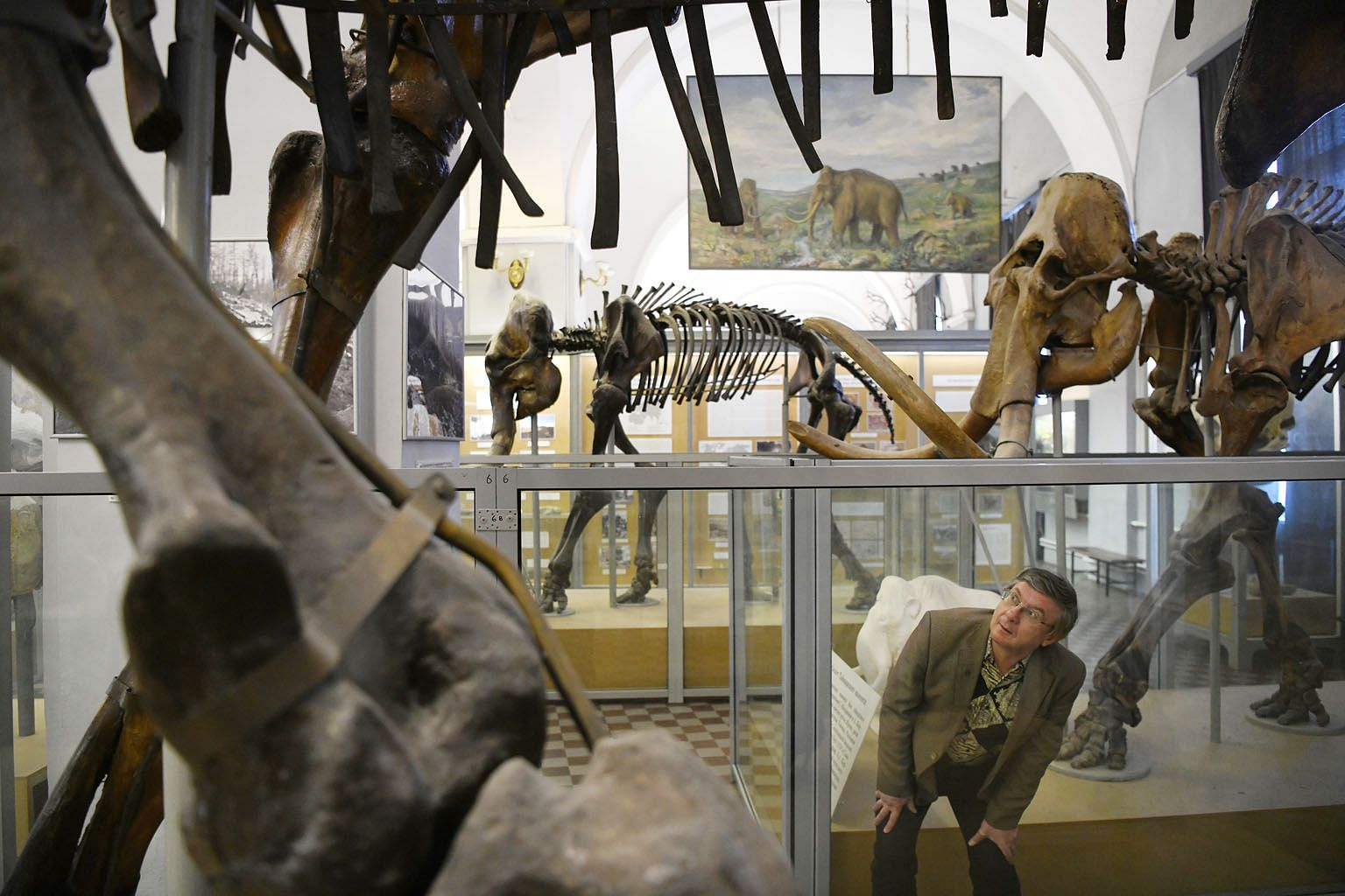 Above: Dr Alexei Tikhonov among some of the museum's mammoths. Left: A taxidermist at the museum at work.