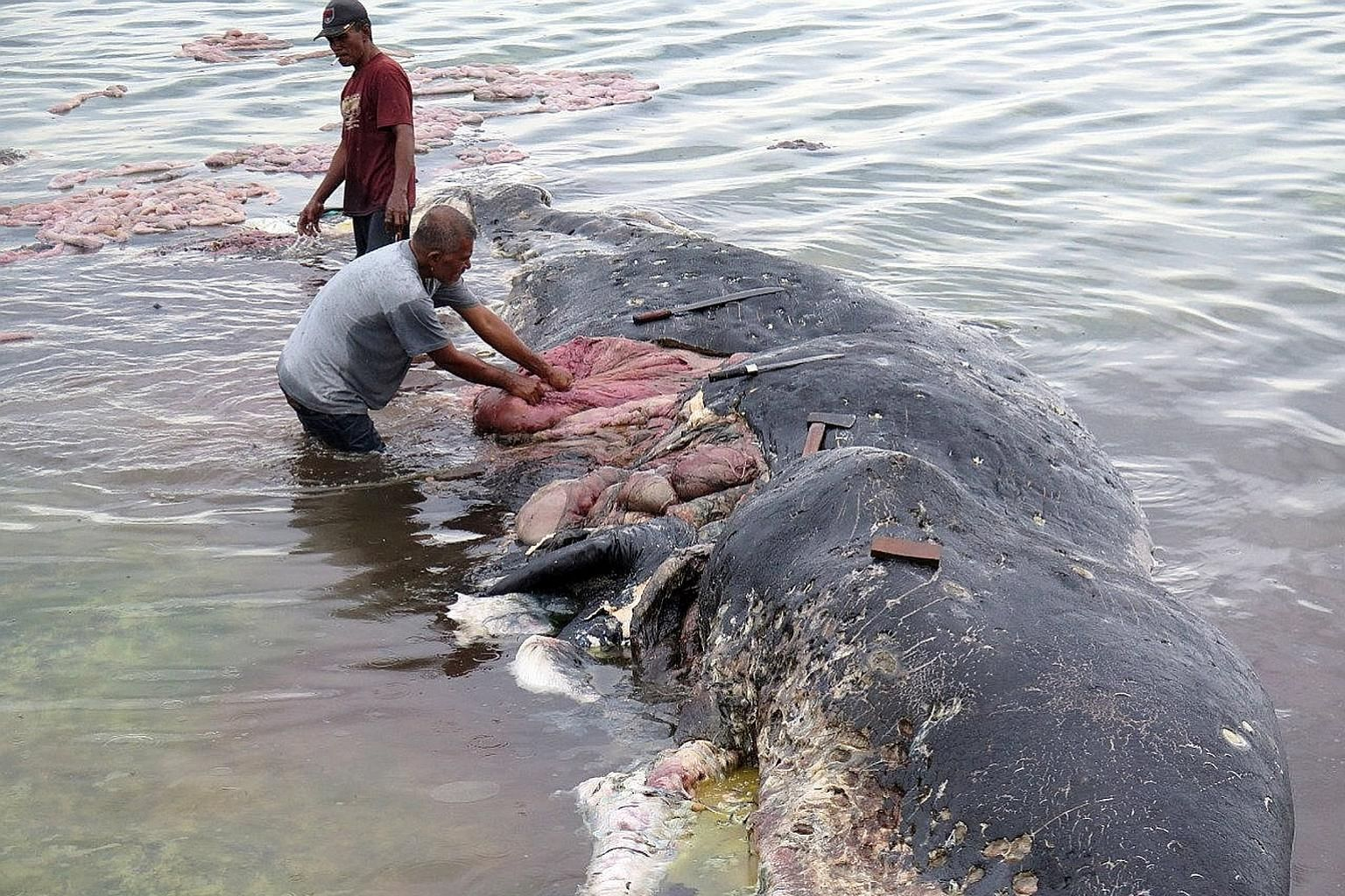 Workers collecting plastic items and rubbish, including a sack with more than 1,000 pieces of string, from the stomach of a sperm whale found dead in an Indonesia national park.