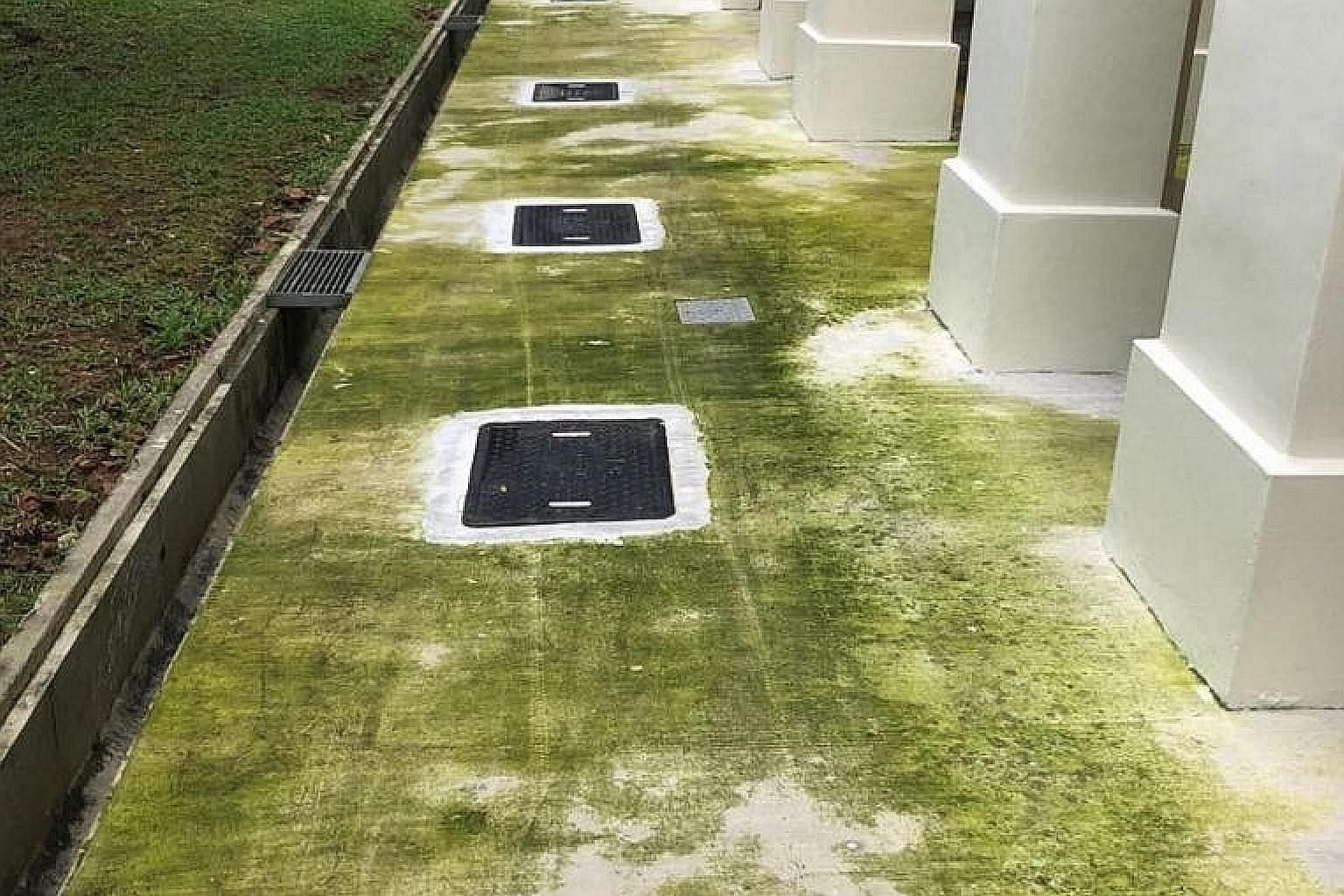 Dark green patches next to the void deck of several blocks in Woodlands Street 81 are seen in a photo posted on online forum Reddit.