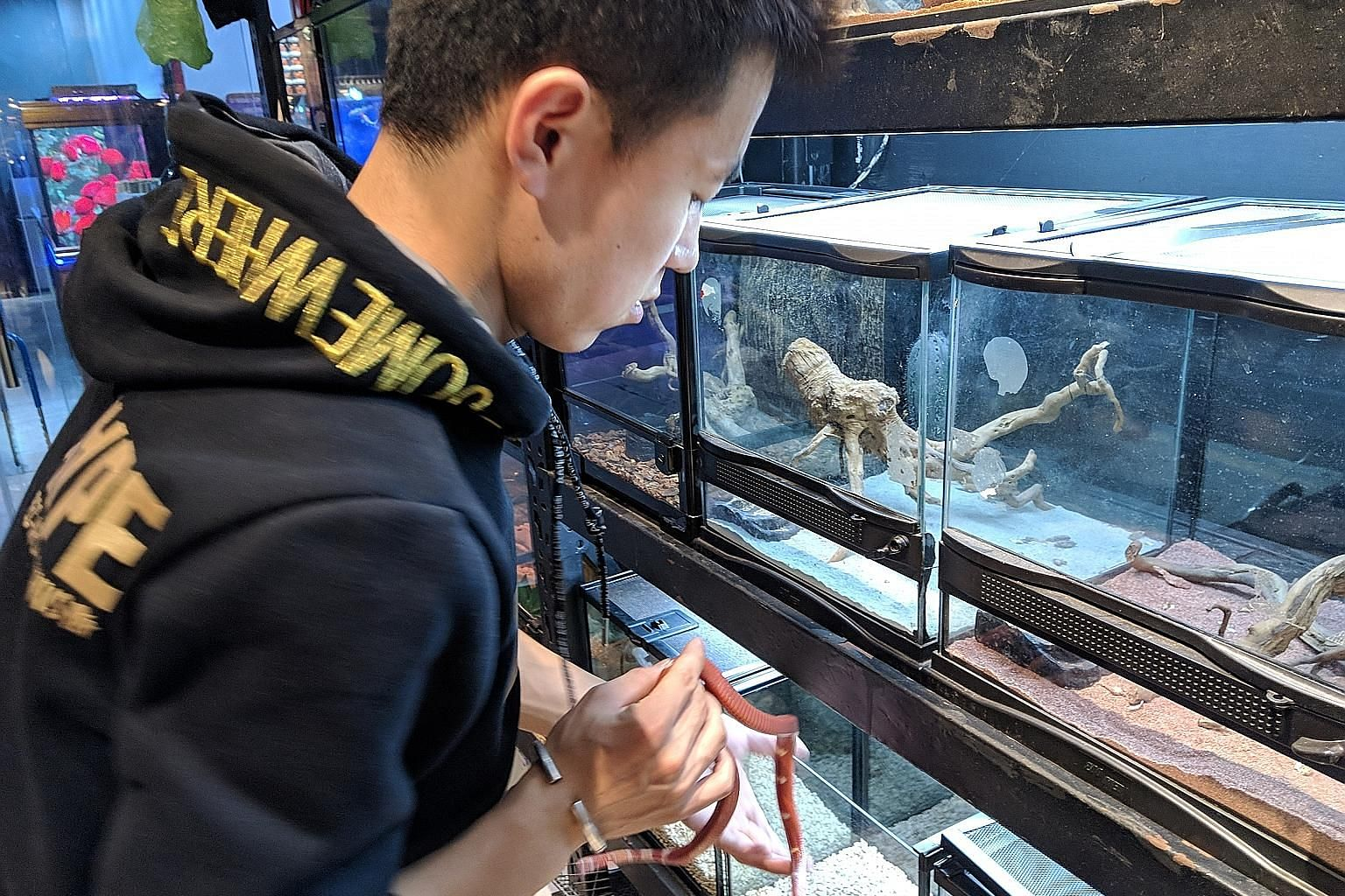 Left: Mr Bao Lei taking a snake out of its tank at his shop in Beijing. Above: A listing for peacocks on Chinese shopping website Taobao.