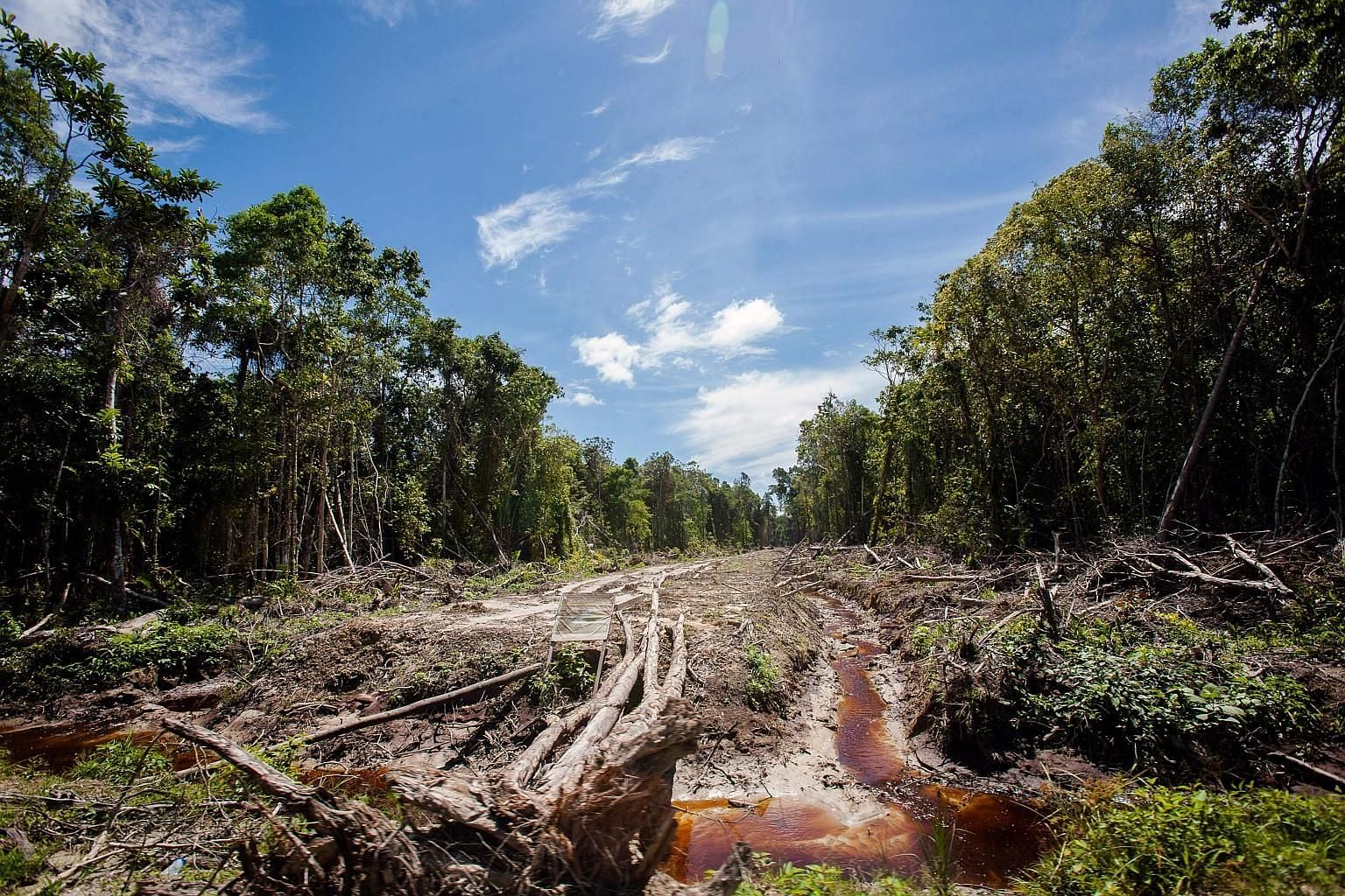 A peatland forest being cleared in Aceh in 2013 for a palm oil plantation. Activists say Norway's decision to phase out the use of palm oil-based biofuels from its renewable energy mix from 2030 is a major step forward in saving the rainforests, prot
