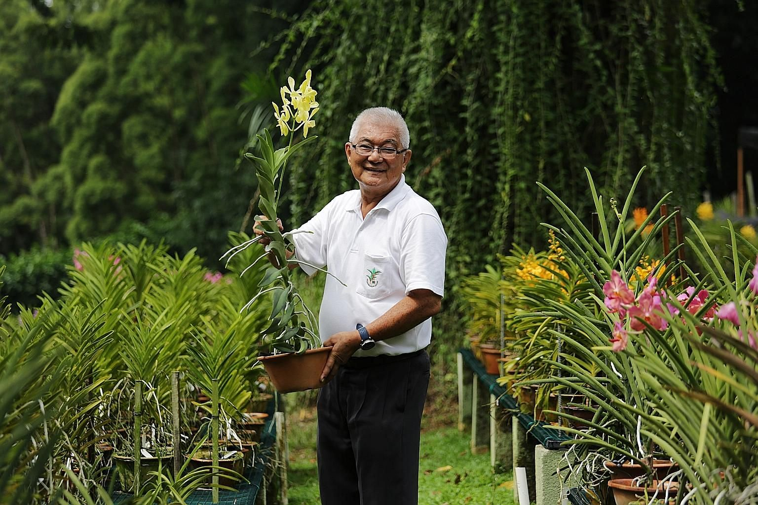 Mr David Lim was a distinguished orchid breeder and grower whose most well-known hybrids include the Aranda Lee Kuan Yew orchid.