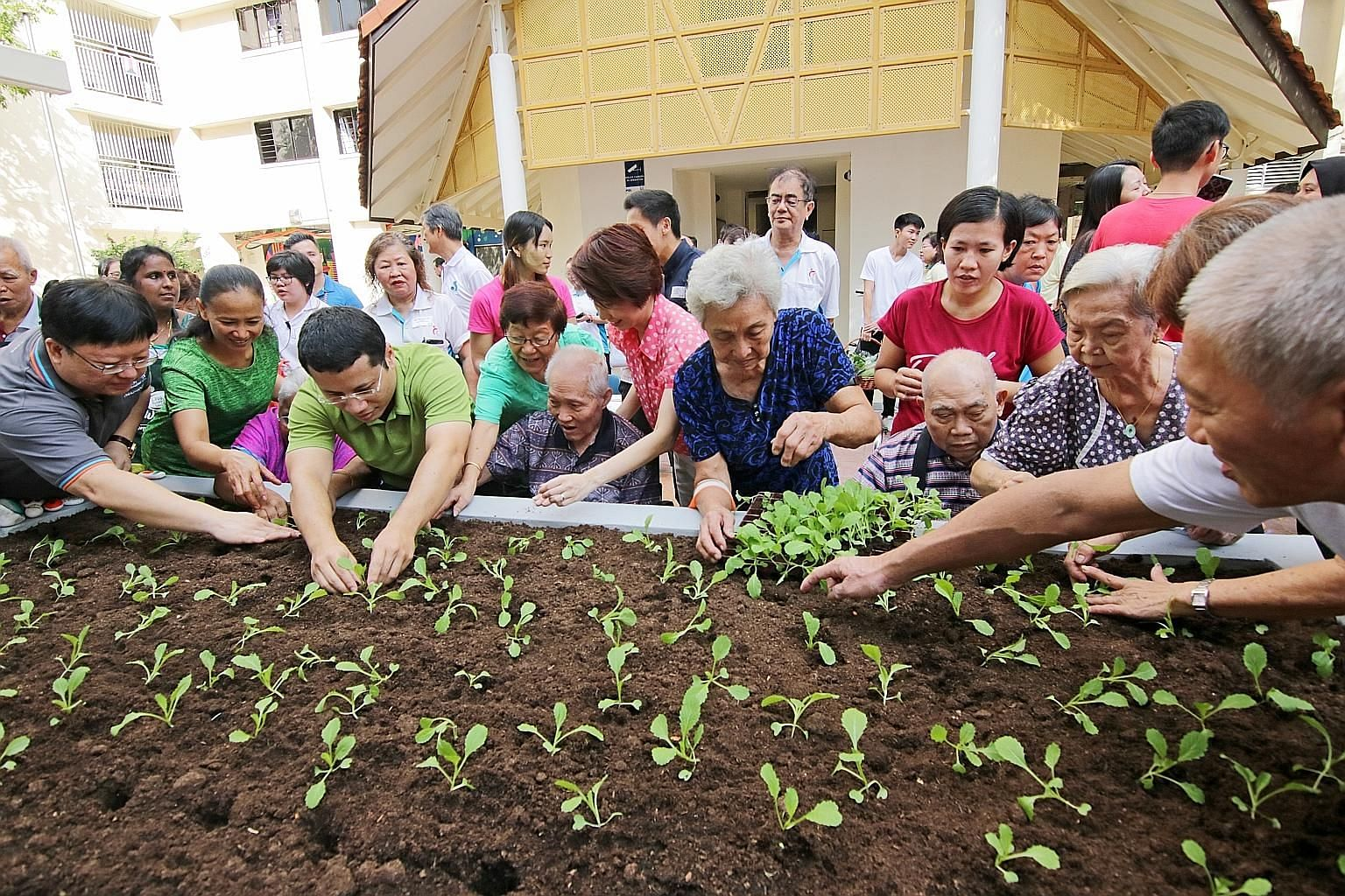 Retiree May Lee leads a team of over 20 gardeners and tends to three flourishing community gardens next to Block 106 Bukit Batok Central. Housewife Low Siew Min is a new volunteer who will look after the newly set-up linear garden. Left: Social and F