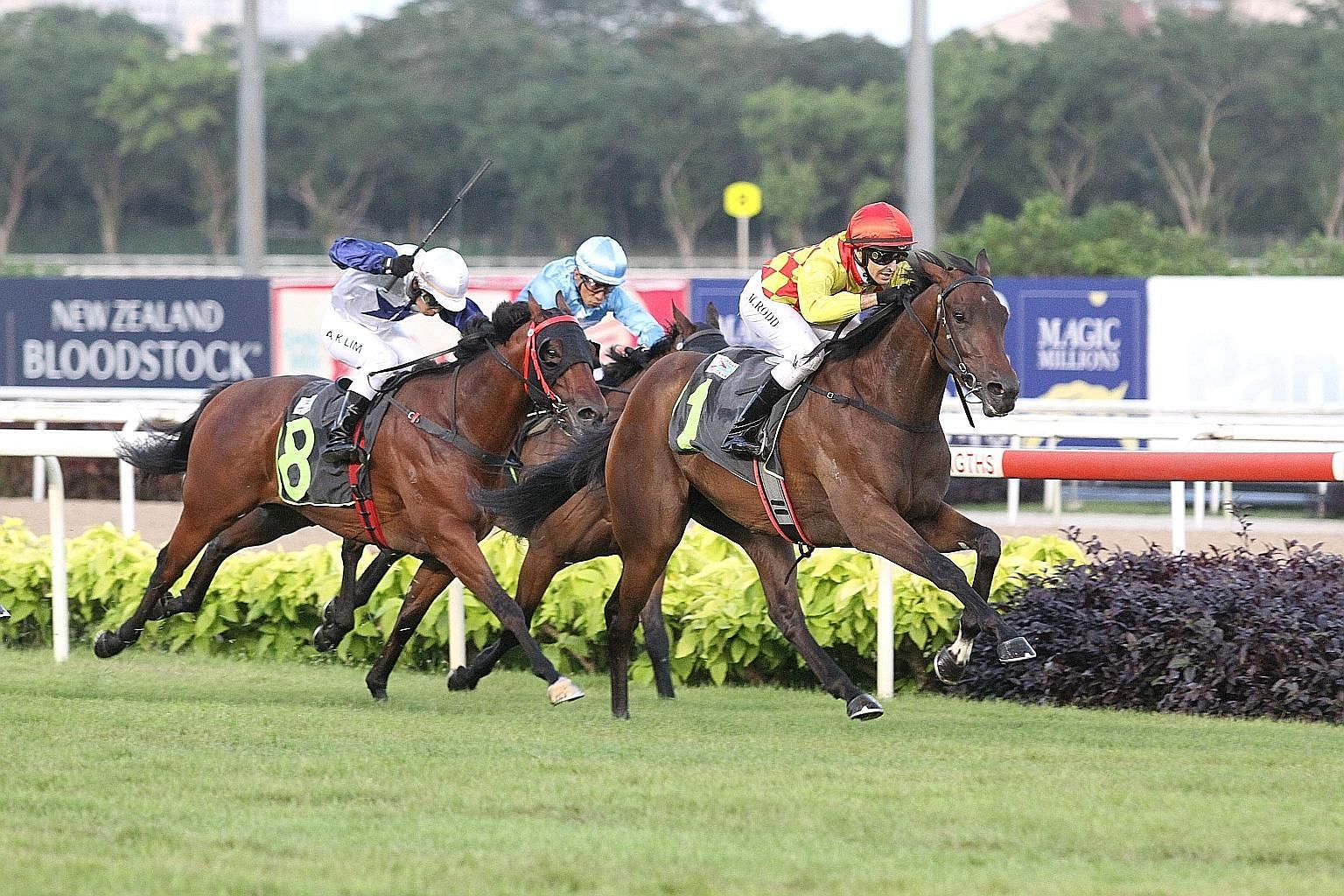 Gold Star (No. 1), the $11 favourite, producing great acceleration in the final 200m to take yesterday's $75,000 Restricted Maiden event over 1,200m on turf at Kranji.