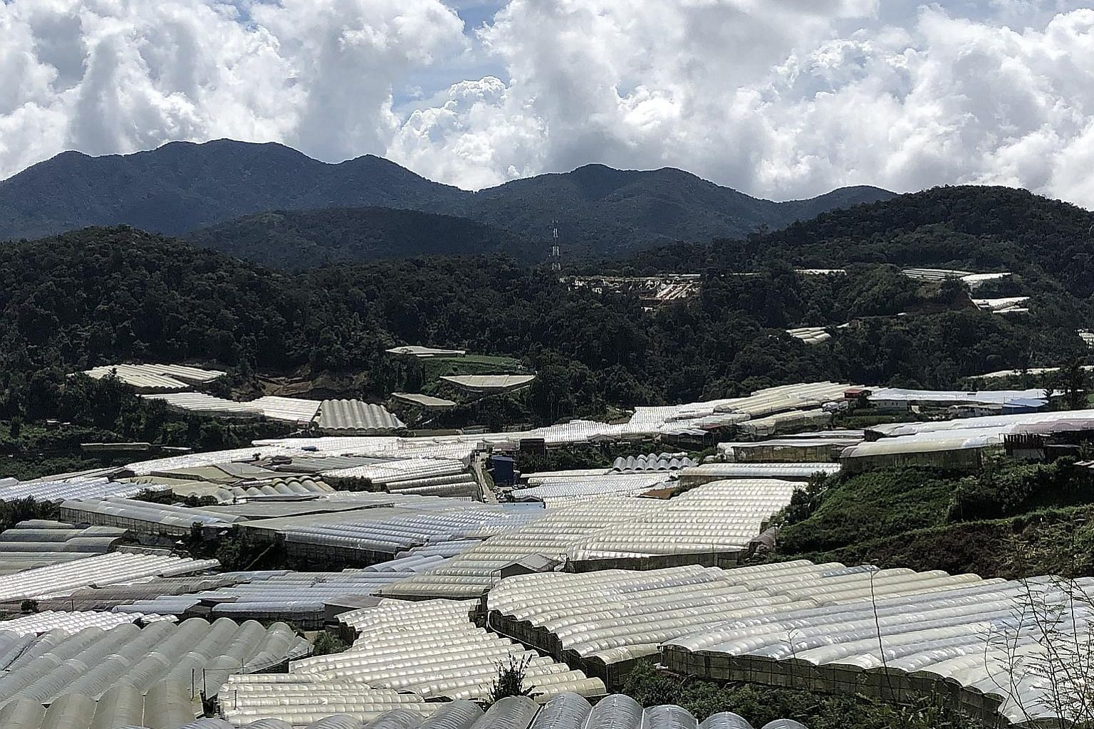 Large farms with white roofs in the Blue Valley region of Cameron Highlands, taking over what was once covered by rainforest.