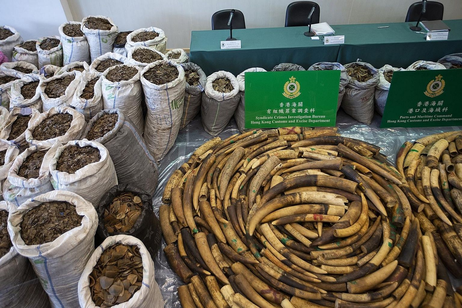 Elephant tusks weighing more than 2 tonnes and over 8 tonnes of pangolin scales on display at a Hong Kong Customs and Excise Department press briefing in Kowloon on Feb 1. Between 2013 and 2017, Hong Kong seized 43 tonnes of pangolin scales and carca