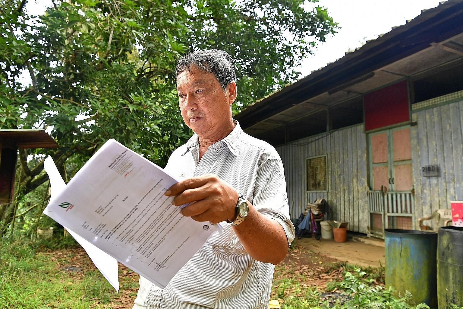 Mr Ong Kim Cheng reading the NParks' Temporary Occupation Licence agreement outside his house. The taxi driver who was born on Pulau Ubin continues to live alone in the house built by his late parents.
