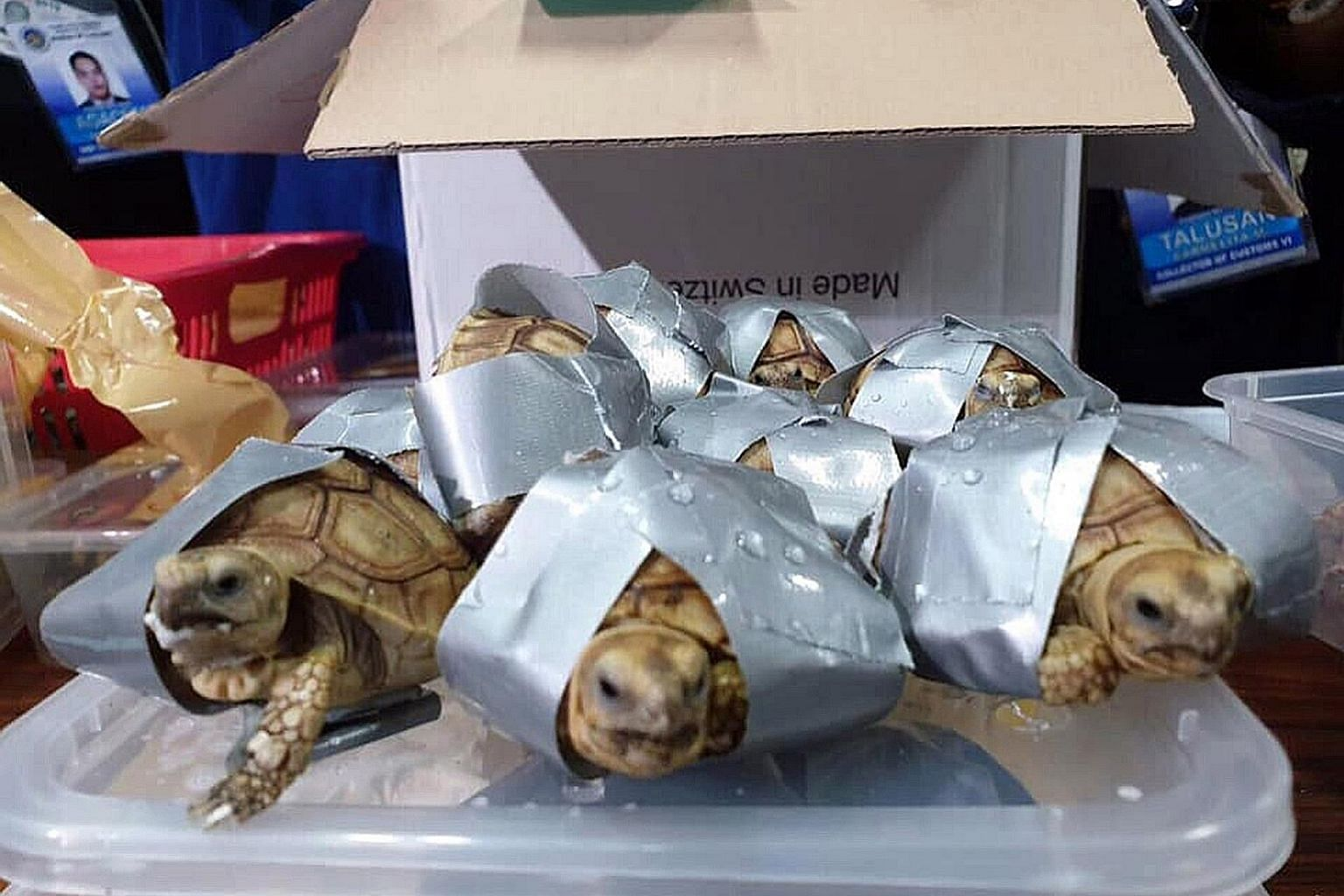 Some of the turtles and tortoises had been restrained with duct tape to immobilise them when they were found at Manila's airport on Sunday in the luggage of a Filipino passenger who had arrived from Hong Kong. The animals had been hidden among clothe