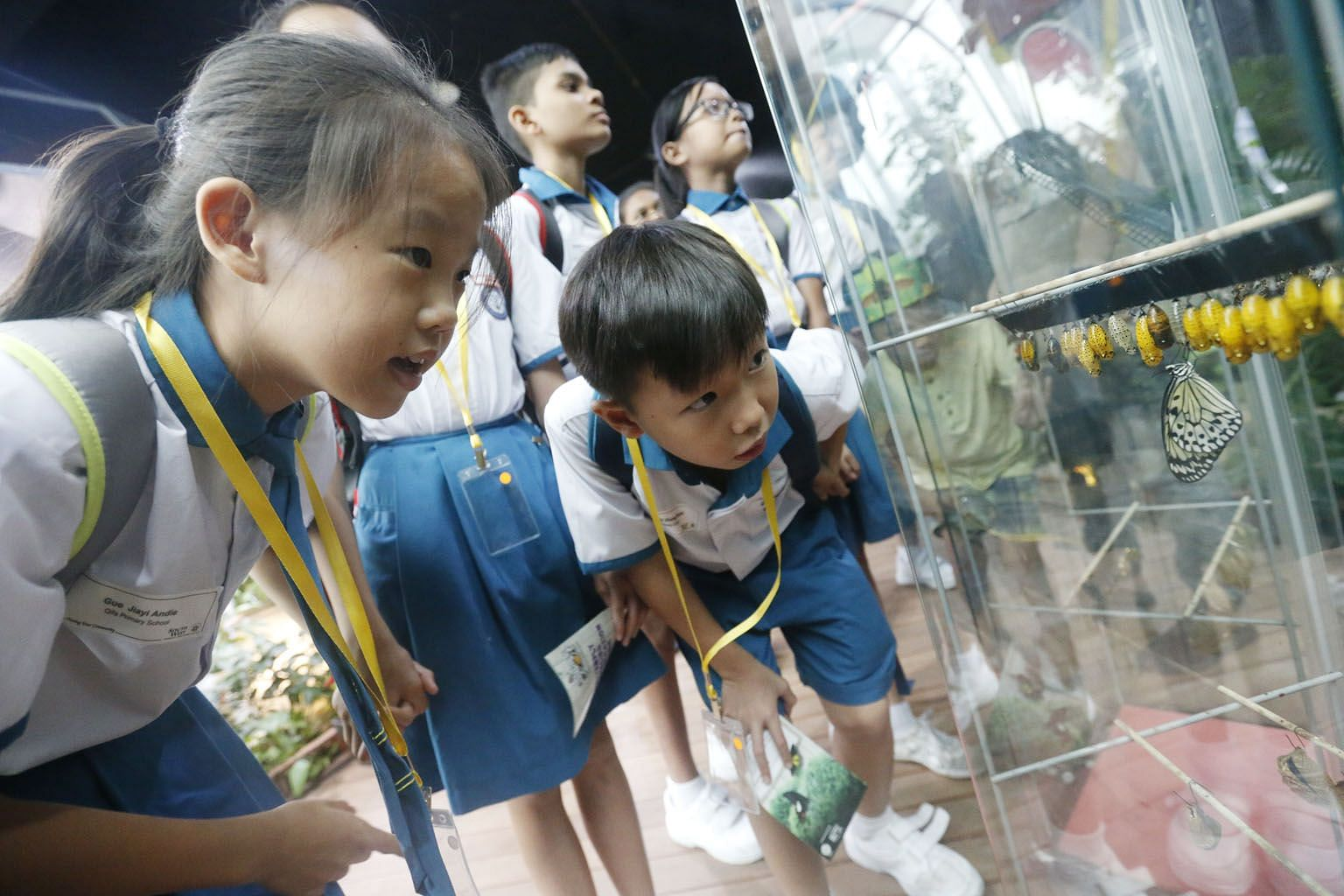Pupils observing the different stages of butterfly metamorphosis at the Science Centre. Developing an open, scientific mindset starts with getting young children passionate about science and technology, and how these impact the world they live in, sa