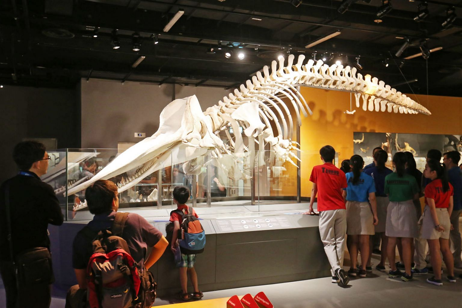 The skeleton of the 10.6m-long sperm whale, nicknamed Jubi Lee, on display at the Lee Kong Chian Natural History Museum. The female whale was found dead off Jurong Island in Singapore's golden jubilee year in 2015, leading to her nickname. From her D