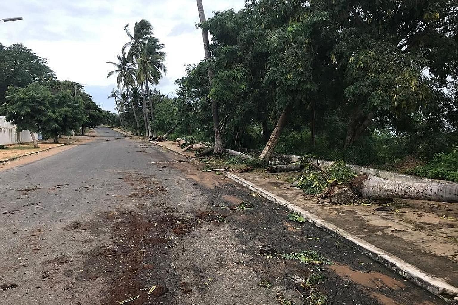 Damaged trees in Pemba city in Cabo Delgado province in the southern African nation of Mozambique yesterday after Cyclone Kenneth struck. The authorities have said there are concerns that five rivers as well as coastal waterways could overflow. Aroun