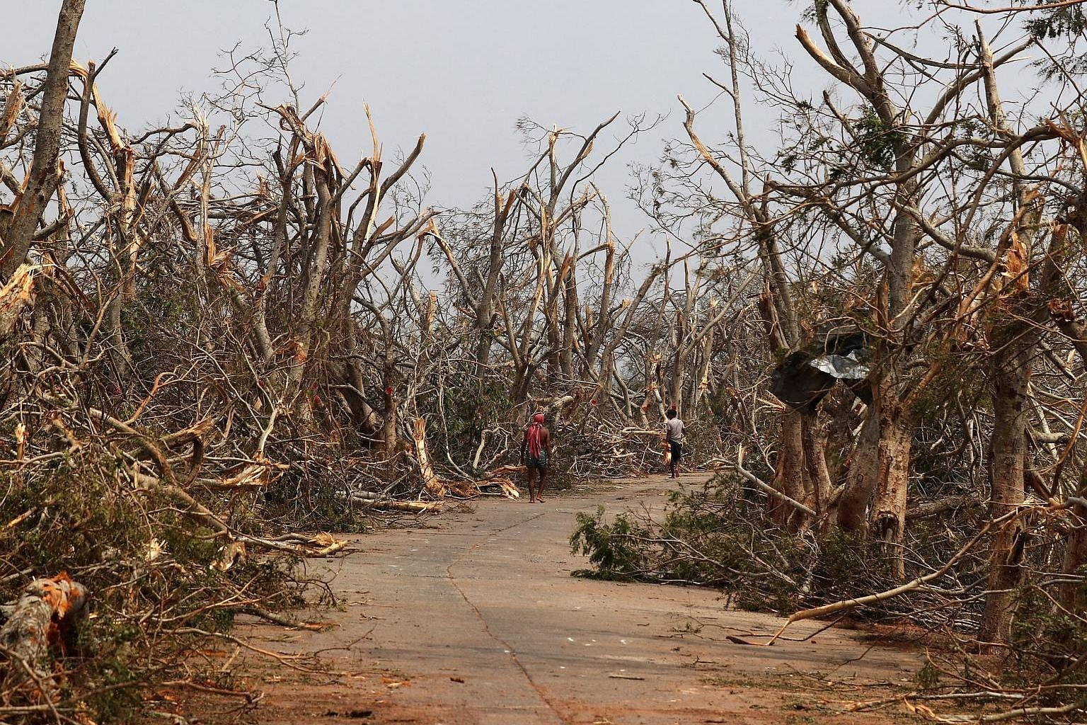 Trees in the Puri district of India's eastern state of Odisha with their branches snapped and leaves torn off in the aftermath of Cyclone Fani last Saturday. The fierce storm left a trail of damage in eastern India and Bangladesh. At least 33 people