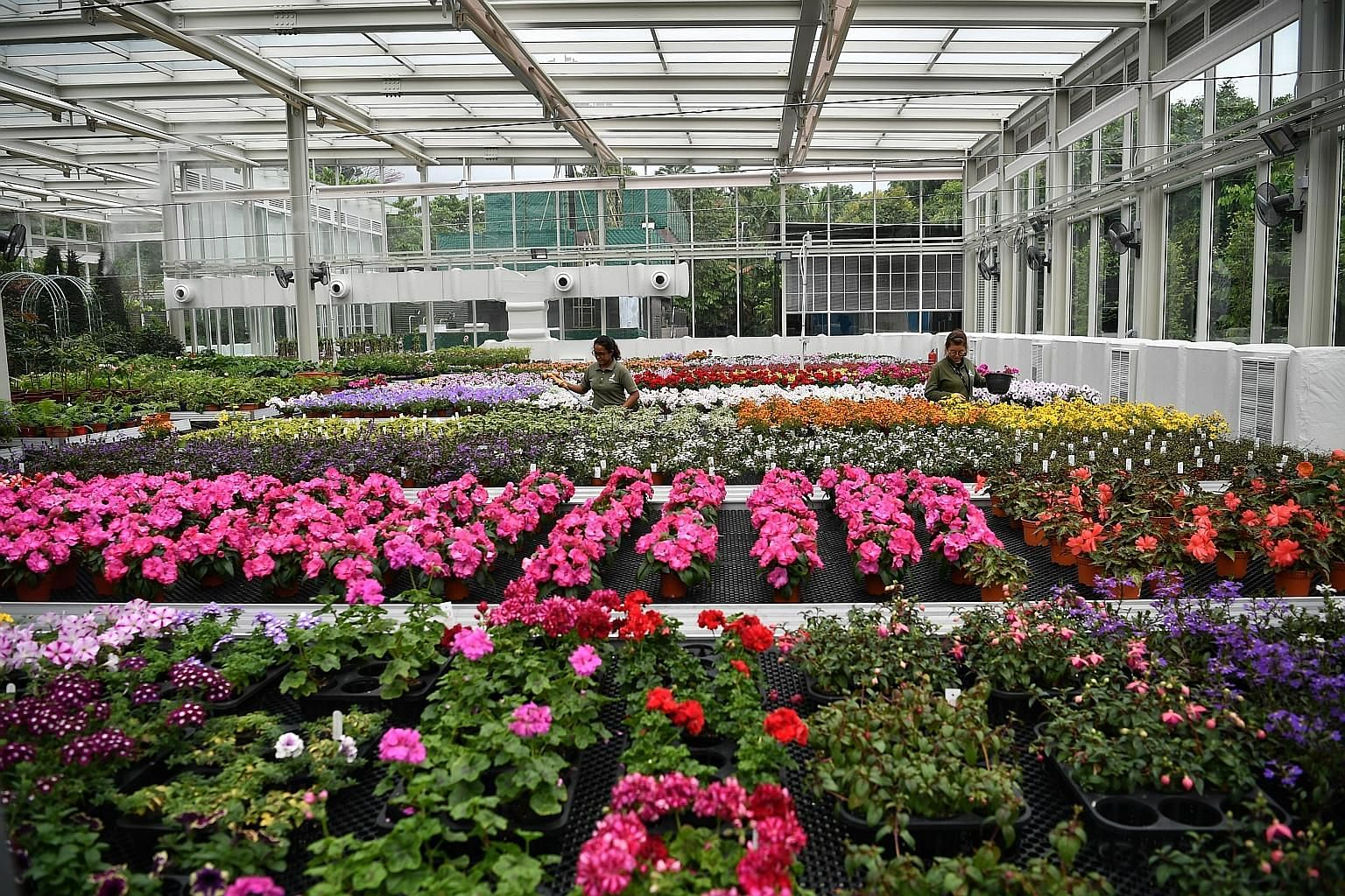 Gardens by the Bay recently opened its latest support biome, a cooled glasshouse in which plants are grown for displays. This support biome, which contains flowering plants from Europe like the Impatiens Roller Coaster Hot Pink and the Calibrachoa Al