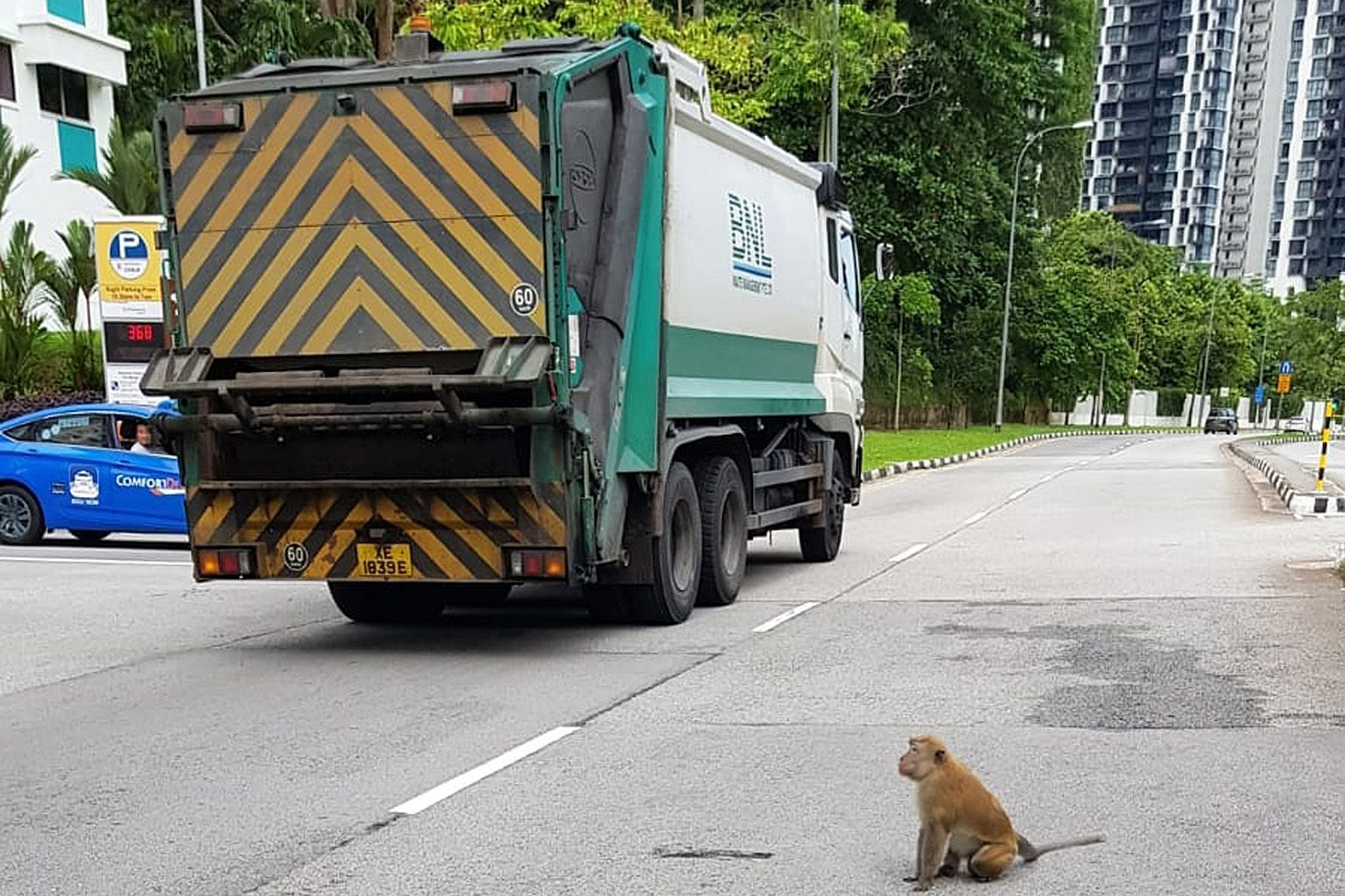 A baby monkey lying on a road in Bukit Panjang yesterday, with a larger one looking on helplessly. PHOTO: ST READER