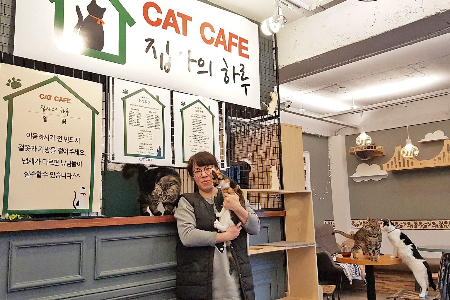 Ms Park Sun-wha posing with cats at the cat cafe A Butler's Day, which has three branches. Most of the cafe's customers are cat owners or parents who come with their children. She estimates that there are currently 50 such cafes in South Korea.