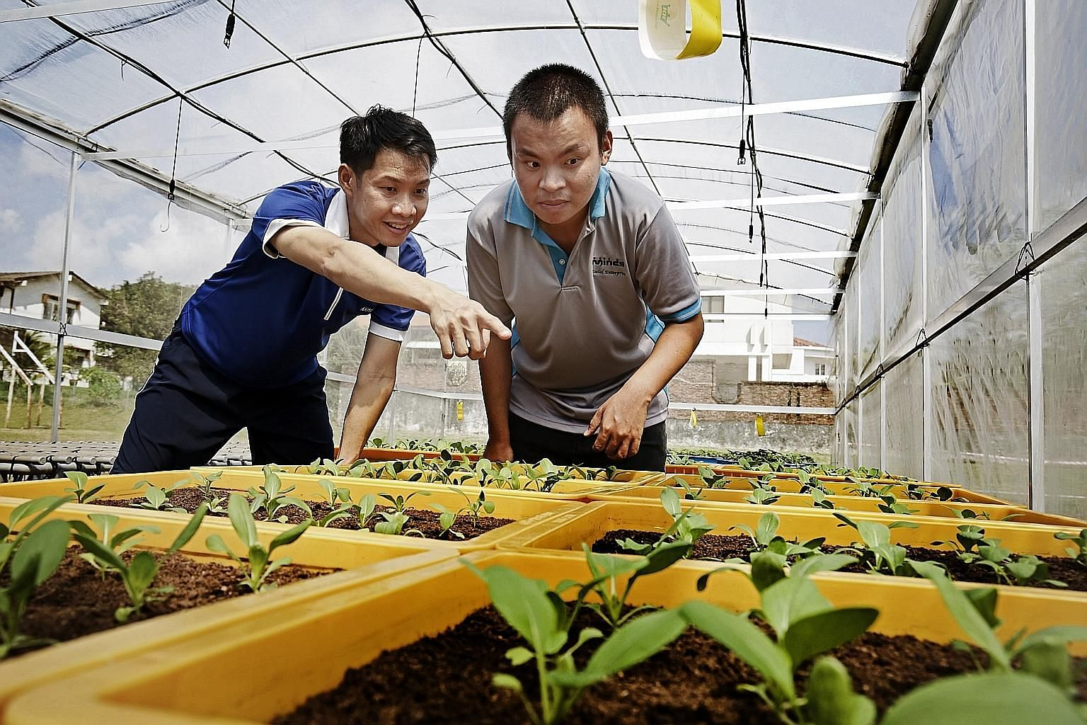 Minds senior training officer Hsu Hsia Yang (far left) with beneficiary Ang Kian Chuan, who has an intellectual disability, at one of the greenhouses at the Minds centre in Rosyth Road, near Serangoon.