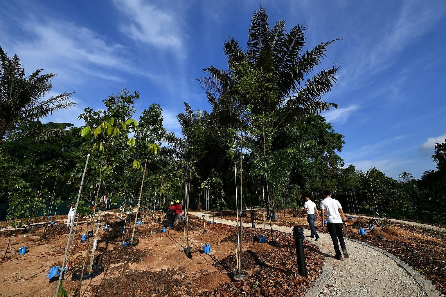 A community tree-planting site at the upcoming OCBC Arboretum in the Botanic Gardens. The arboretum will serve as a test bed for new tech tools for tree maintenance that will be progressively rolled out across the island.