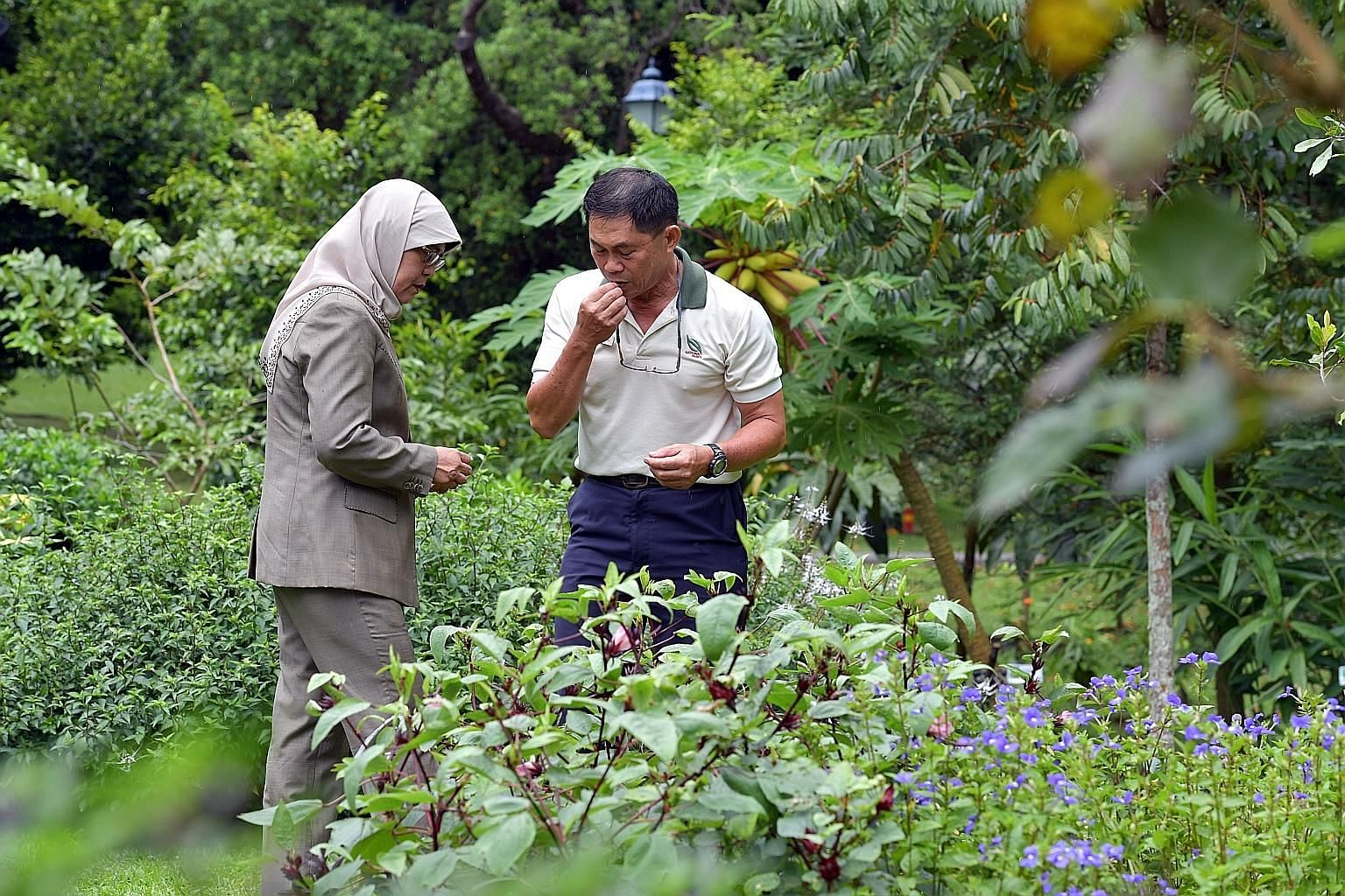 In a photo taken on Sept 14, 2017, Mr Wong Tuan Wah, National Parks Board's group director for Fort Canning Park and the Istana, is seen with President Halimah Yacob in the gardens of the Istana.