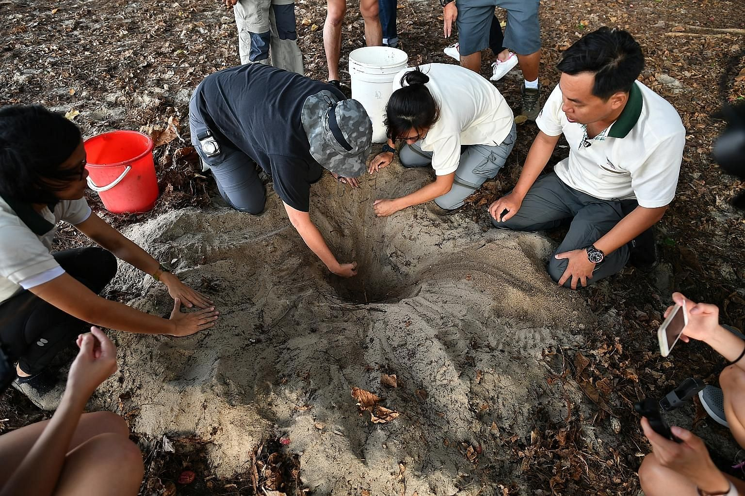 Staff and volunteers from the National Parks Board (far left) extracting hawksbill turtle eggs from a nest at East Coast Park yesterday. The eggs were carefully placed in a bucket filled with moist sand (left), to be transported to the turtle hatcher