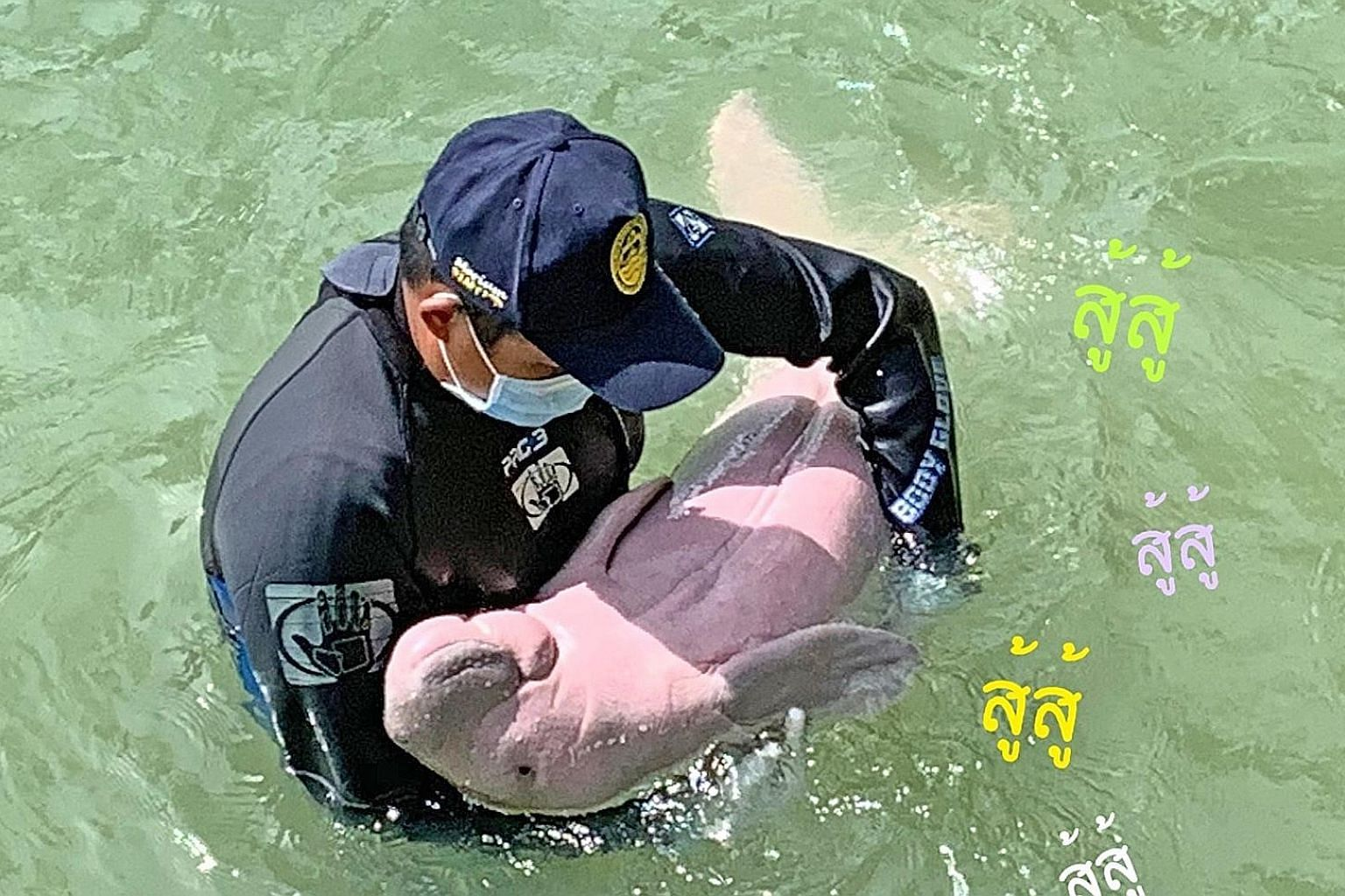 Above: Rescued dugong Mariam exposing her pink belly and relaxing in the arms of a carer. Left: Pieces of plastic that were found in the intestinal tract of Mariam. The dugong died on Aug 17 at the Trang province marine park. PHOTOS: DEPARTMENT OF MA