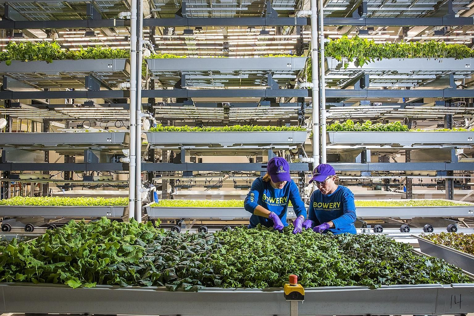 Farmers working at the Bowery Farming's indoor farm in Kearny, New Jersey, in the United States. The start-up says automation, space-saving vertically stacked crops and a year-round growing season make its operations over 100 times more productive pe