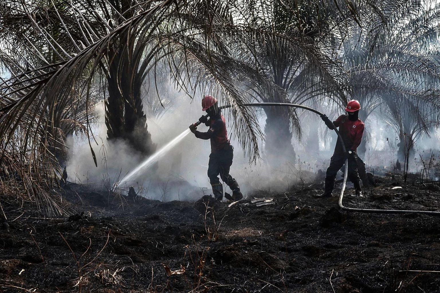 Forest fire task force officers trying to extinguish a peatland fire at a palm oil plantation in Pekanbaru in Indonesia's Riau province on Sept 4. PHOTO: AGENCE FRANCE-PRESSE