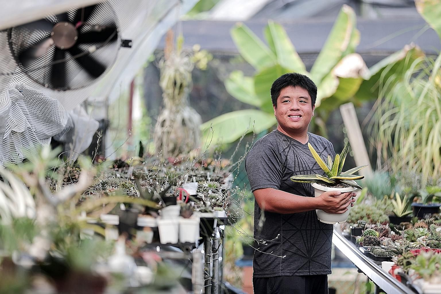 Ms Namita Kinjawadekar (above left) has names for each of her 60 plants in her flat's balcony while Mr David Mong (above right), with his wife Sharon Phua, carries his favourite orchid into his air-conditioned bedroom at night. Mr Shawn Chen (left) f