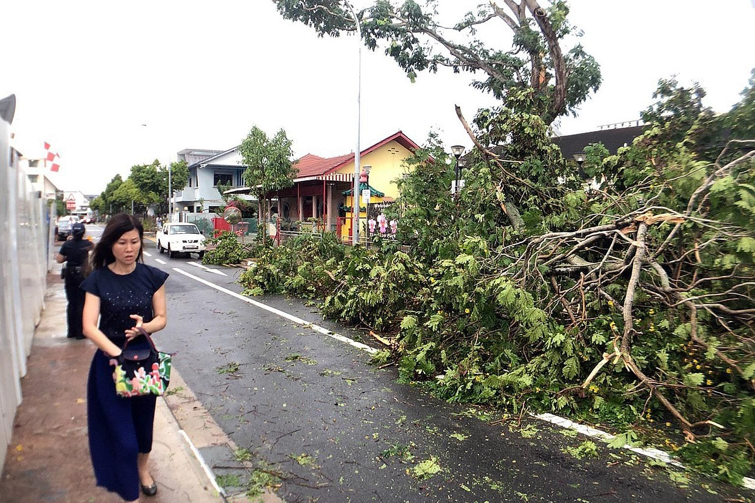 Thundery showers took down this tree at Thomson Park in Jalan Keli off Upper Thomson Road yesterday afternoon, obstructing part of the road. Showers are expected over Singapore in the next few days, the weatherman said yesterday, bringing some respit