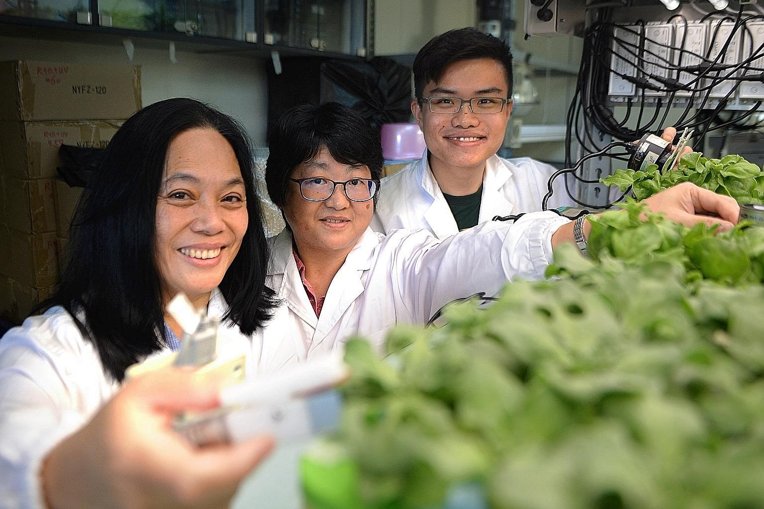 The National Institute of Education's (from left) Associate Professor He Jie, 59, research fellow Qin Lin and student Dominic Koh with the common ice plant, which they experimented with to see if it could grow under purely artificial LED light and in
