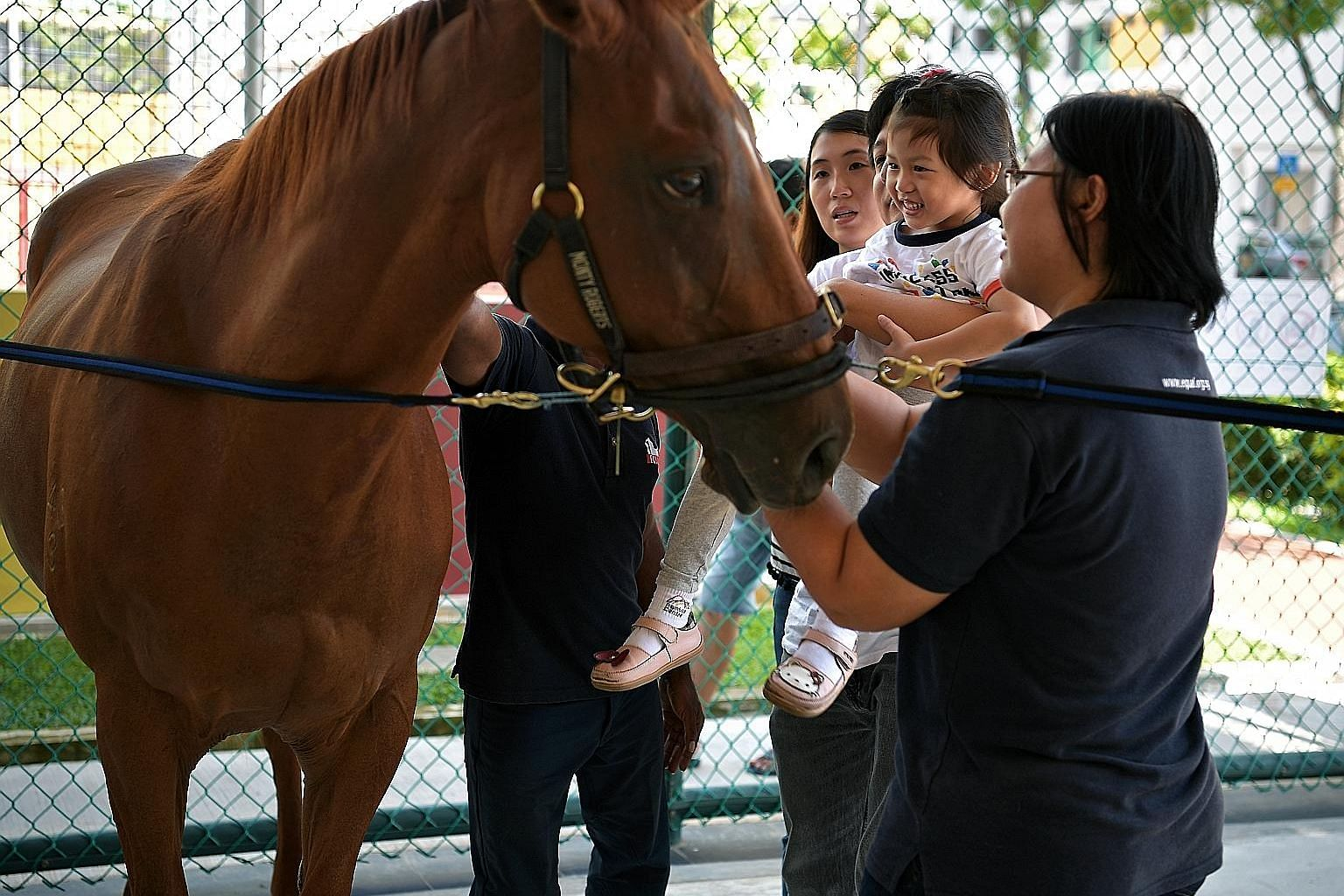 Janice Png, four, getting a closer look at therapy horse Valentina during the launch of a horse therapy programme yesterday. ST PHOTO: KUA CHEE SIONG
