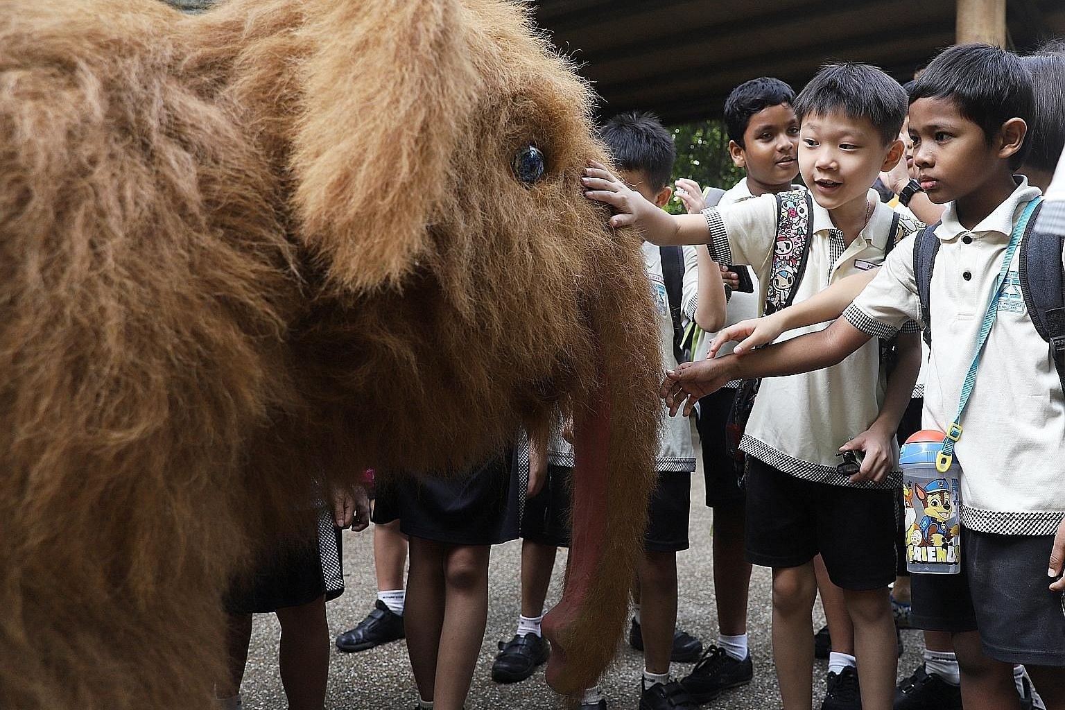 A Zhangde Primary School pupil feeding an elephant during the Gentle Giants Wildlife Tour at the Singapore Zoo last Wednesday. In line with its conservation efforts, the zoo in recent years introduced new ways of caring for its elephants. Pupils from